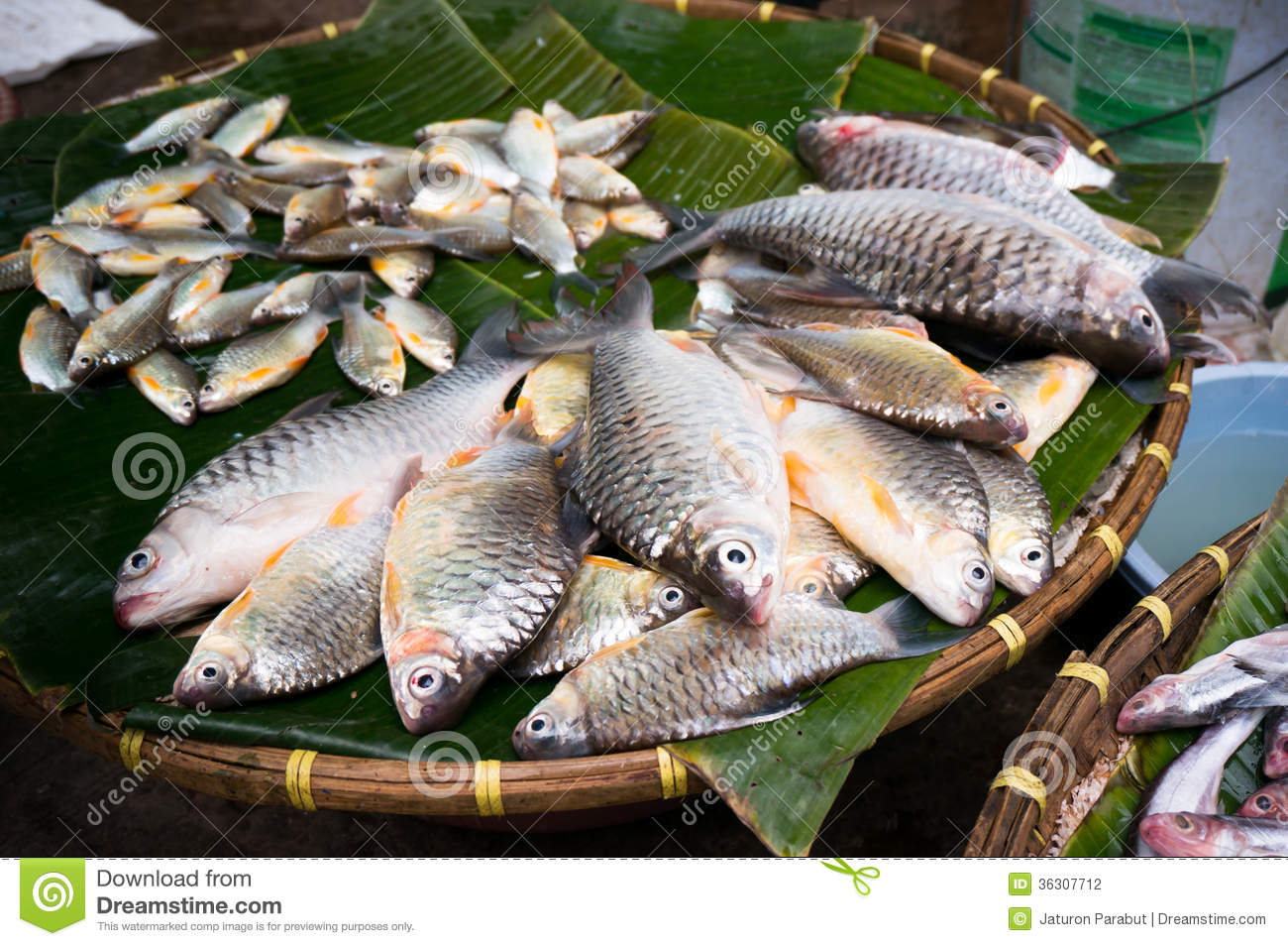 Carp Fish For Sale Stock Photography Image 36307712