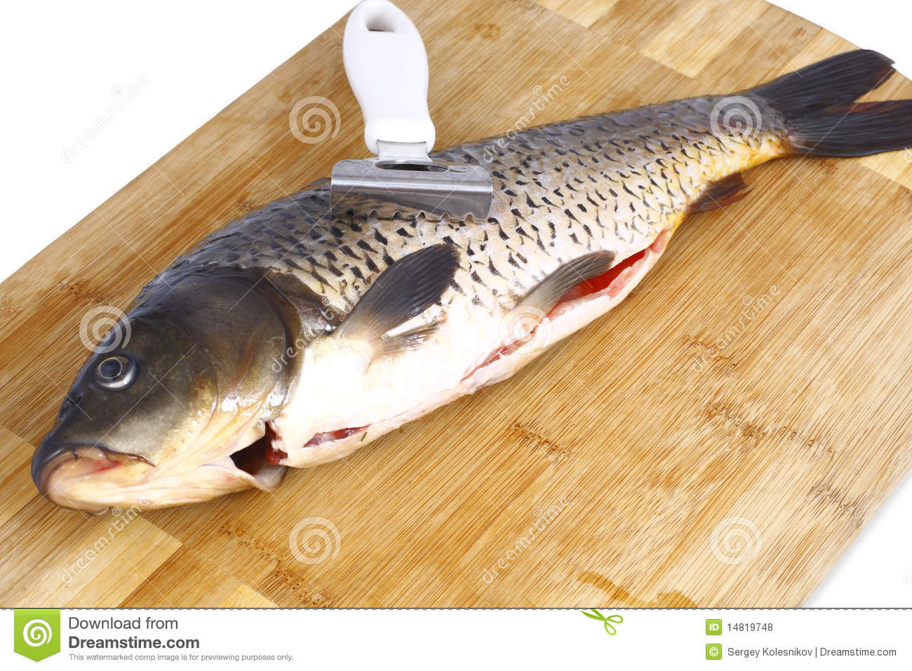 Carp and a knife for cleaning fish royalty free stock for Fish cleaning knife