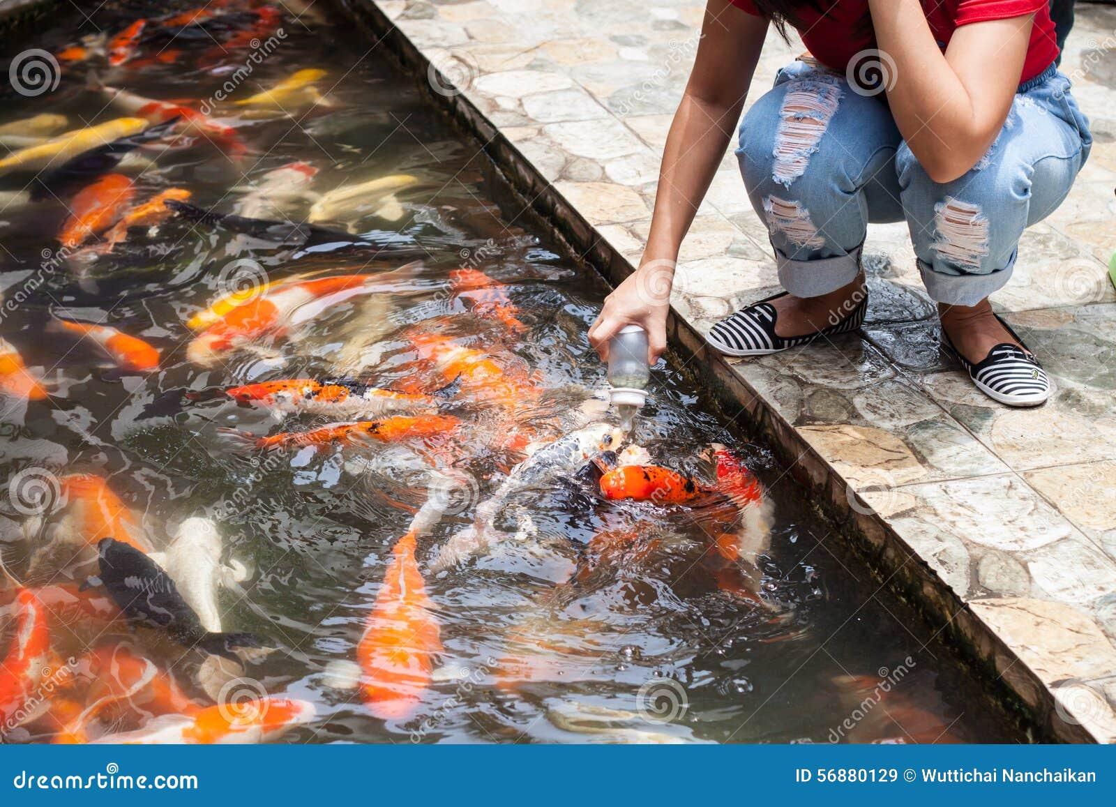 Carpa o carpa di immaginazione, pesce