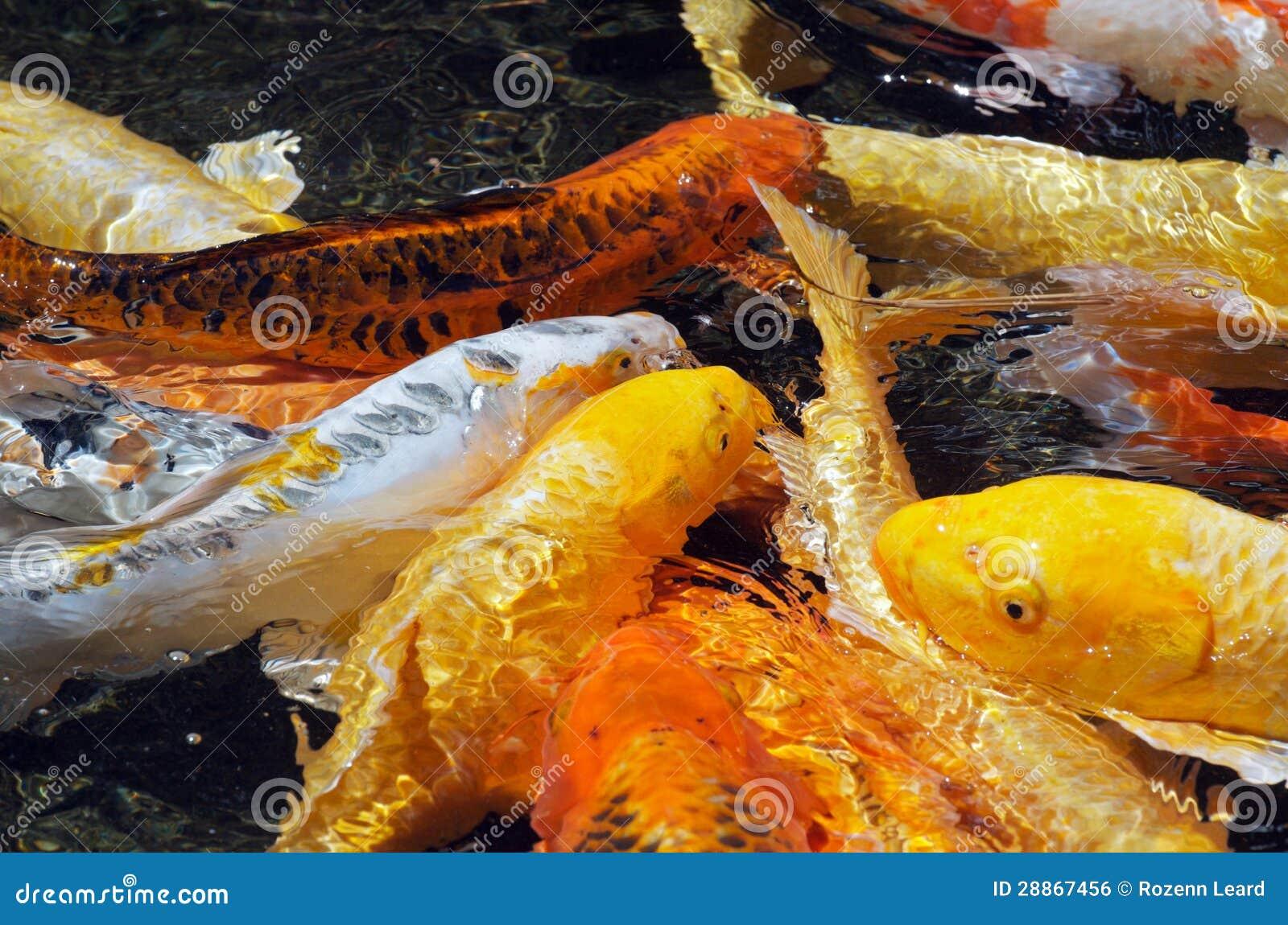 Carpas Coloridas Imagem De Stock Royalty Free Imagem