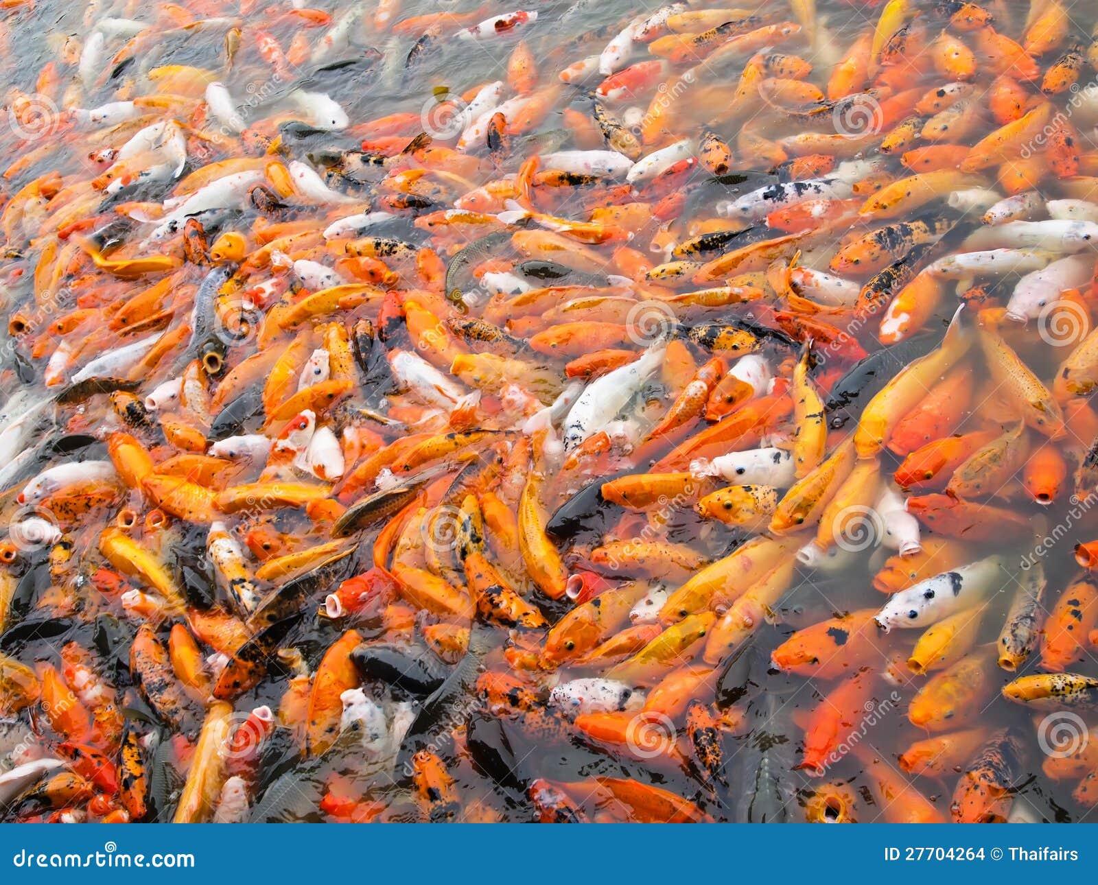 Carpas De Koi Junto Imagens De Stock Imagem 27704264