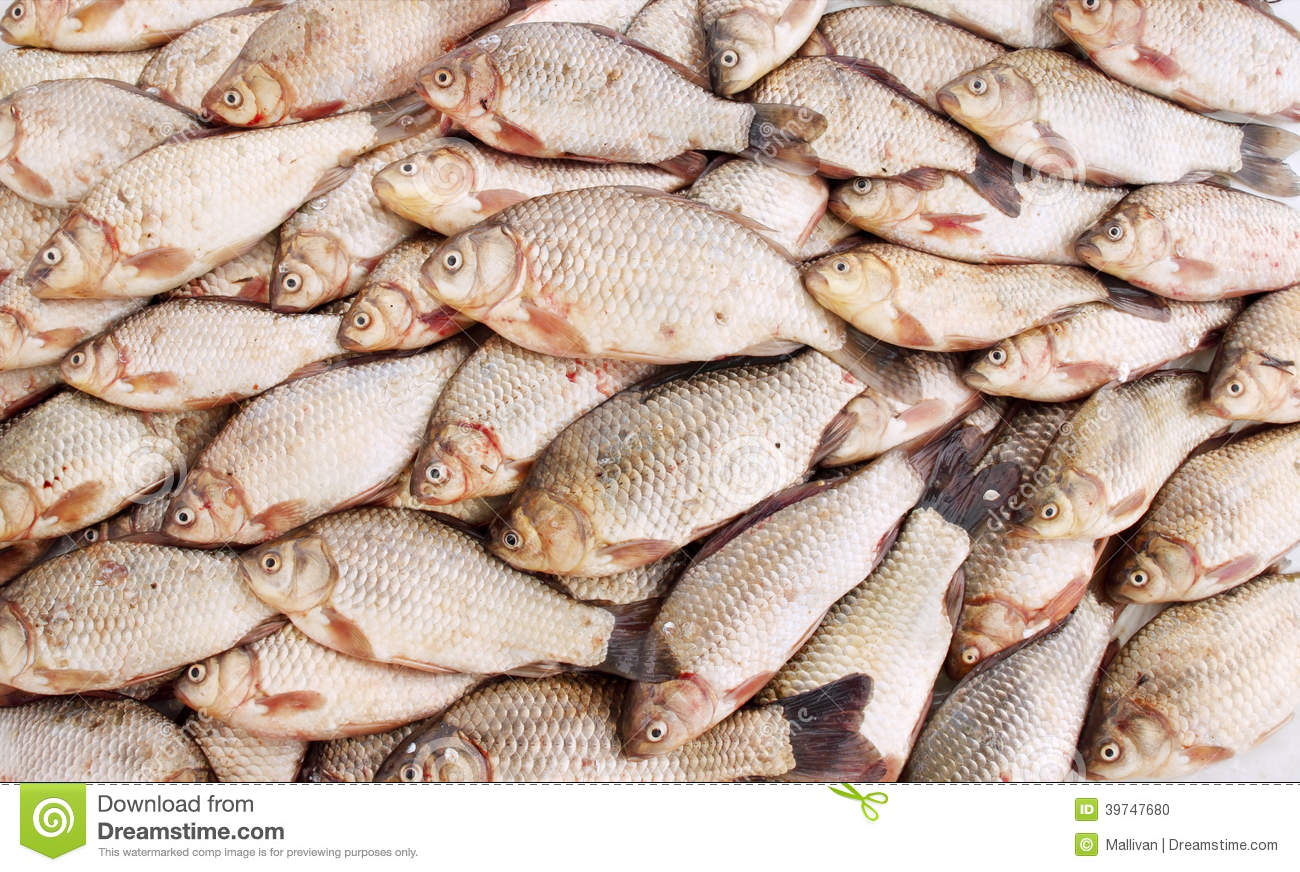 Carpe de poisson d 39 eau douce photo stock image 39747680 for Poisson eau douce