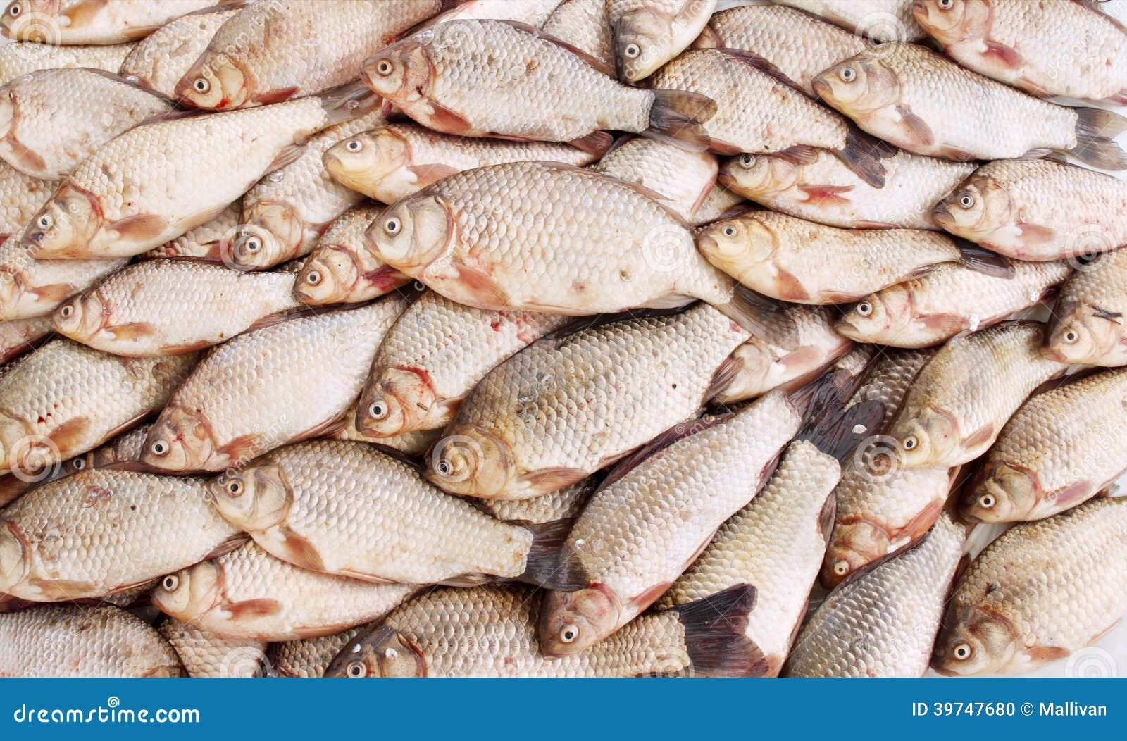 carpe de poisson d 39 eau douce photo stock image 39747680. Black Bedroom Furniture Sets. Home Design Ideas