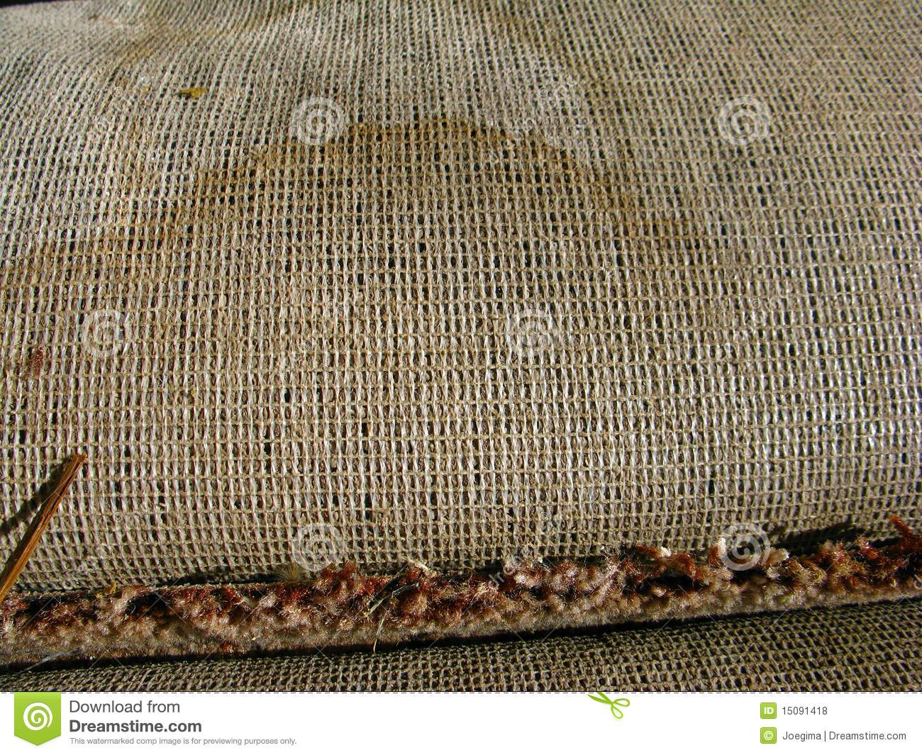 Carpet With Cat Dog Urine Pee Marks 7 3 10 Stock Photo