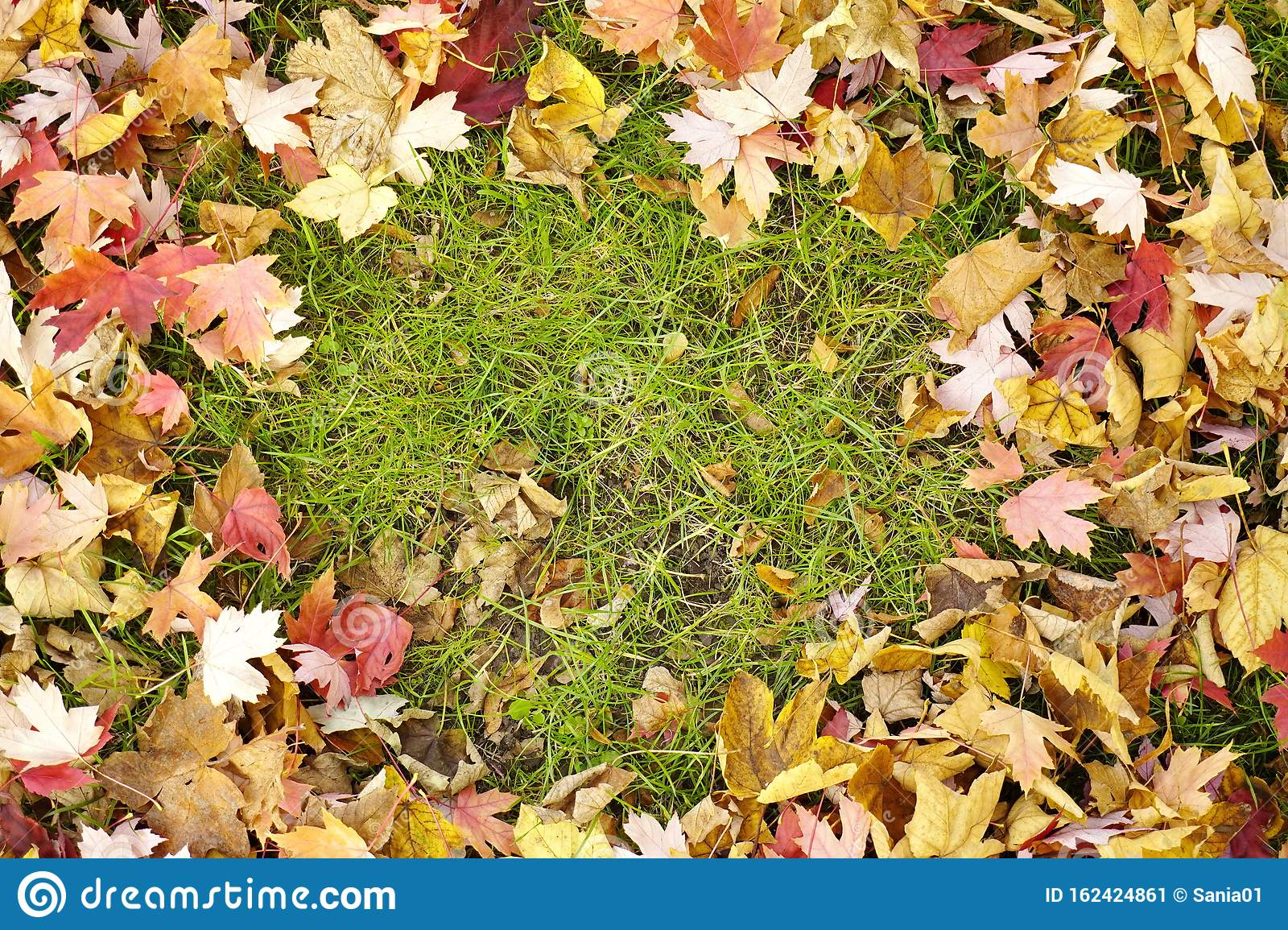 A Carpet Of Fallen Dry Rustling Yellow Red Leaves Autumn Background Screensaver Copy Space Stock Image Image Of Bright Garden 162424861