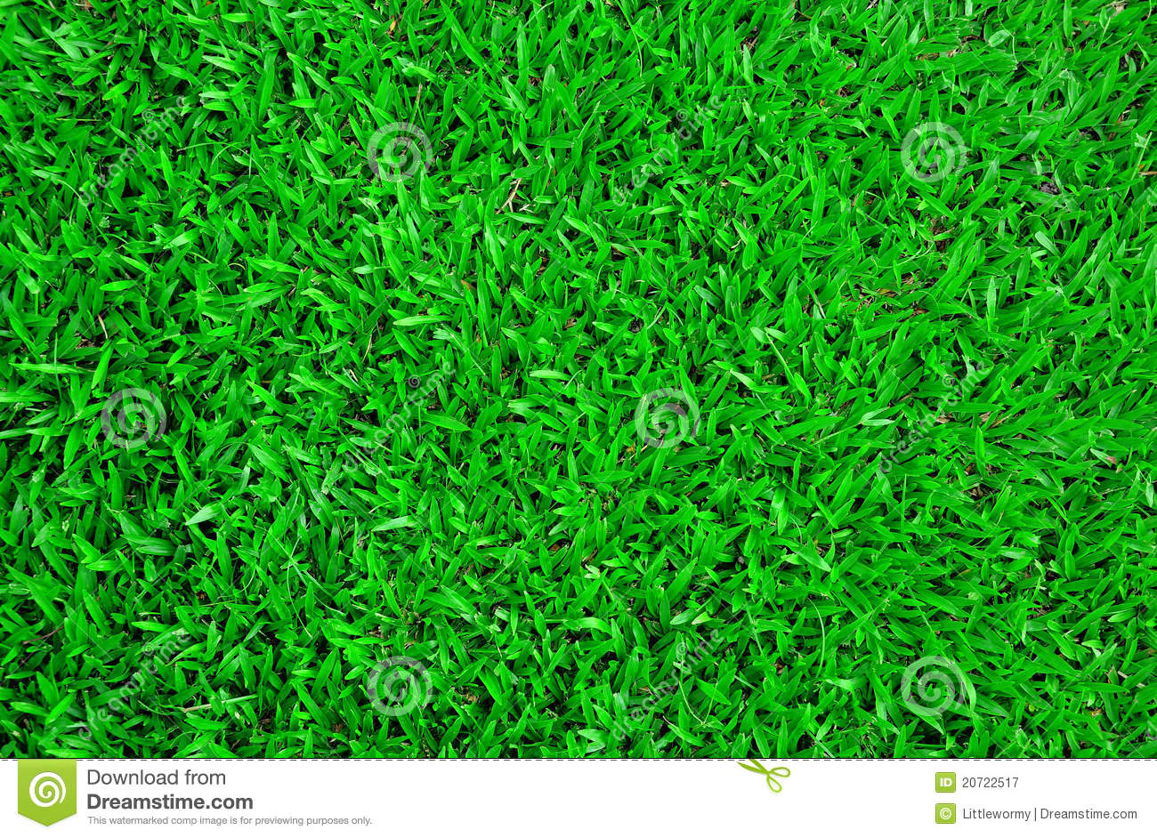 Carpet Grass Stock Image Image Of Grass Field Lawn