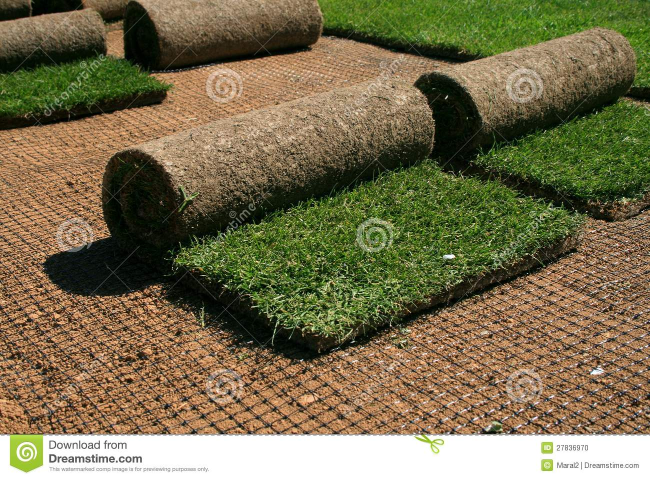 carpet grass. royalty-free stock photo. download carpet grass