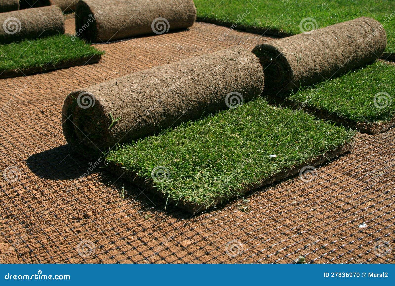 Carpet Grass Stock Photo Image 27836970