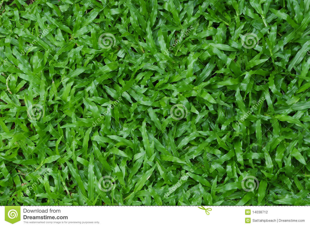 how to kill carpet grass