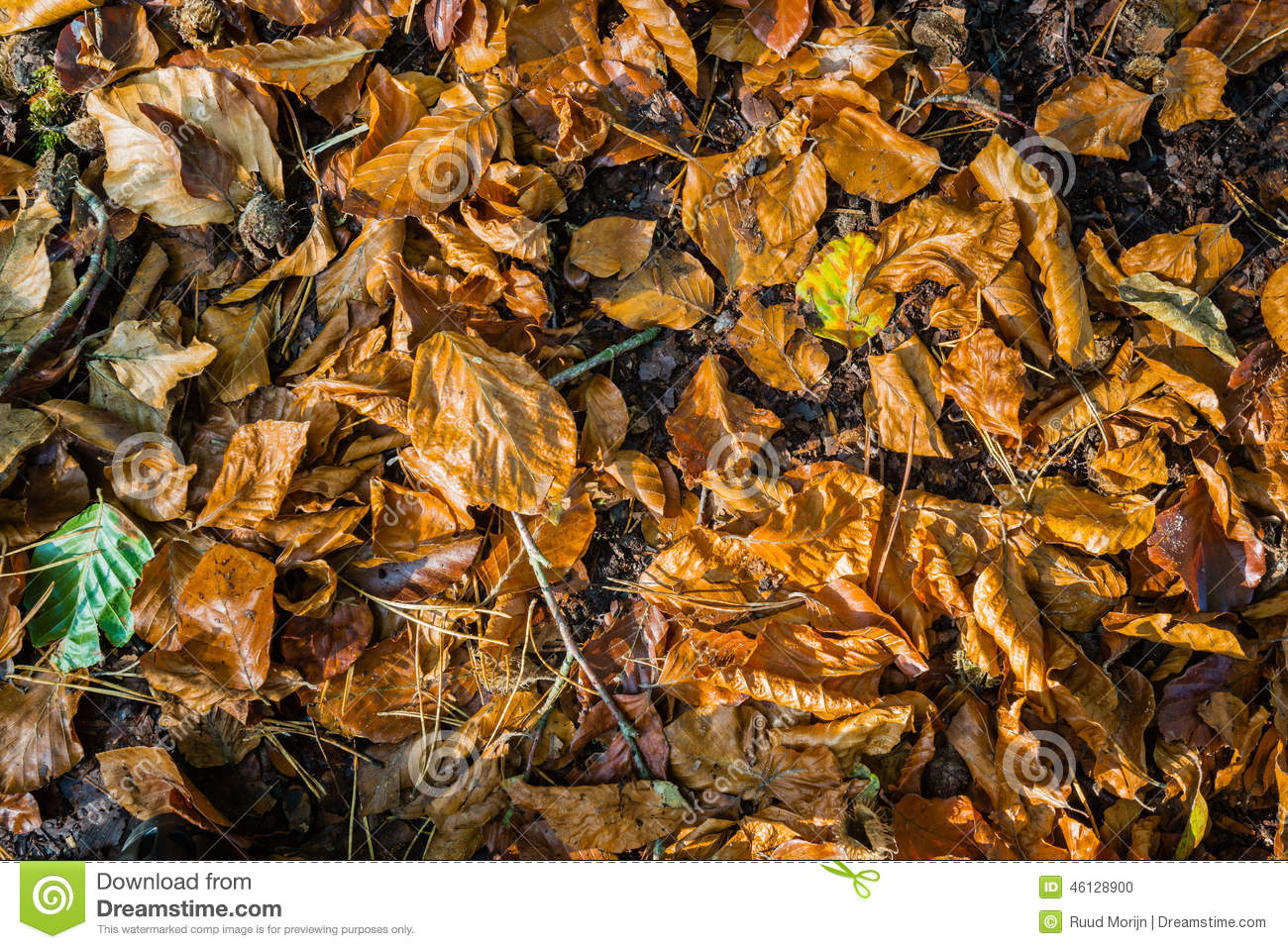 carpet of orange colored beech leaves and twigs stock photo 46128900