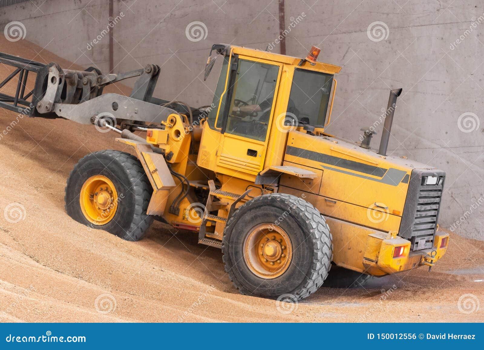 Carregador da roda que trabalha no armazém do trigo da grão Ind?stria da agricultura