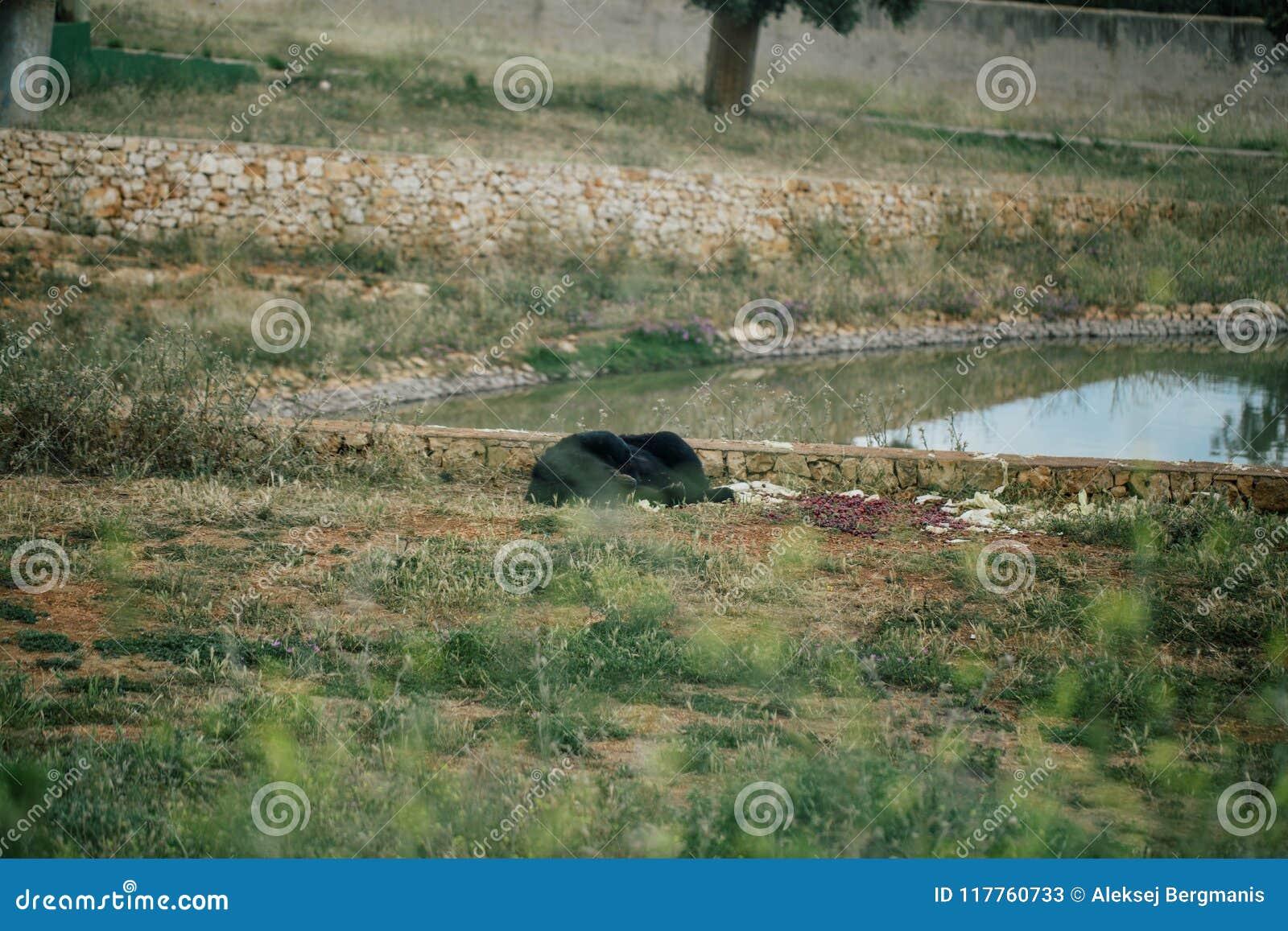 Carregue no jardim zoológico do safari no apulia Itália de Fasano
