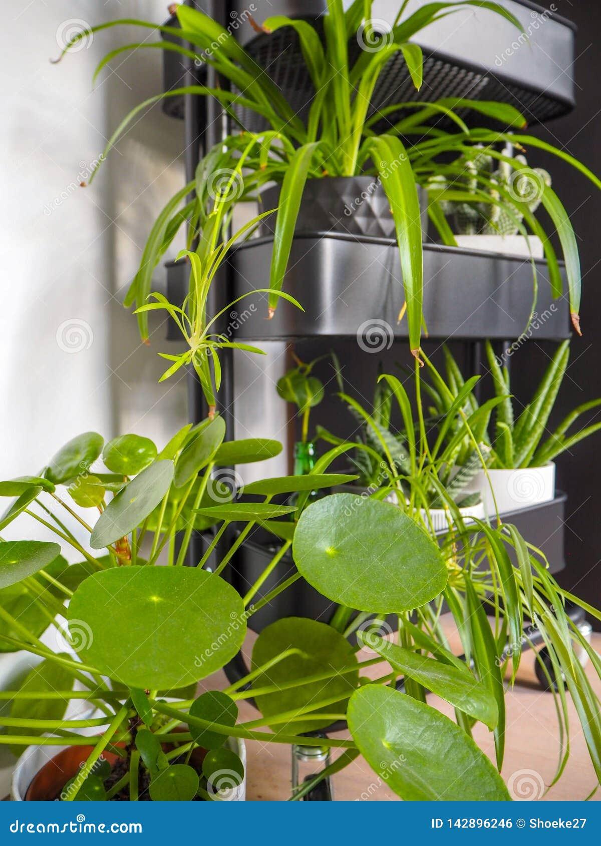 Foto Piante Da Appartamento Verdi carrello grigio industriale riempito con differenti piante