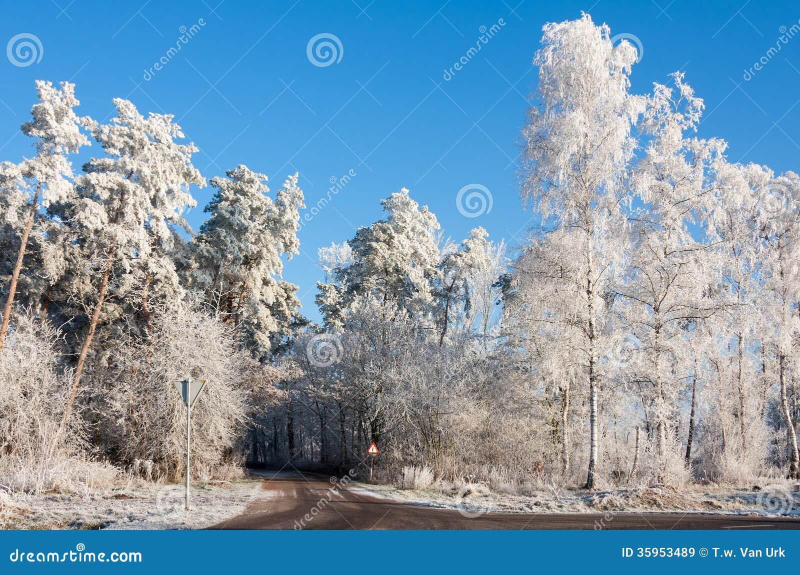 Carretera nacional a través de la madera nevosa