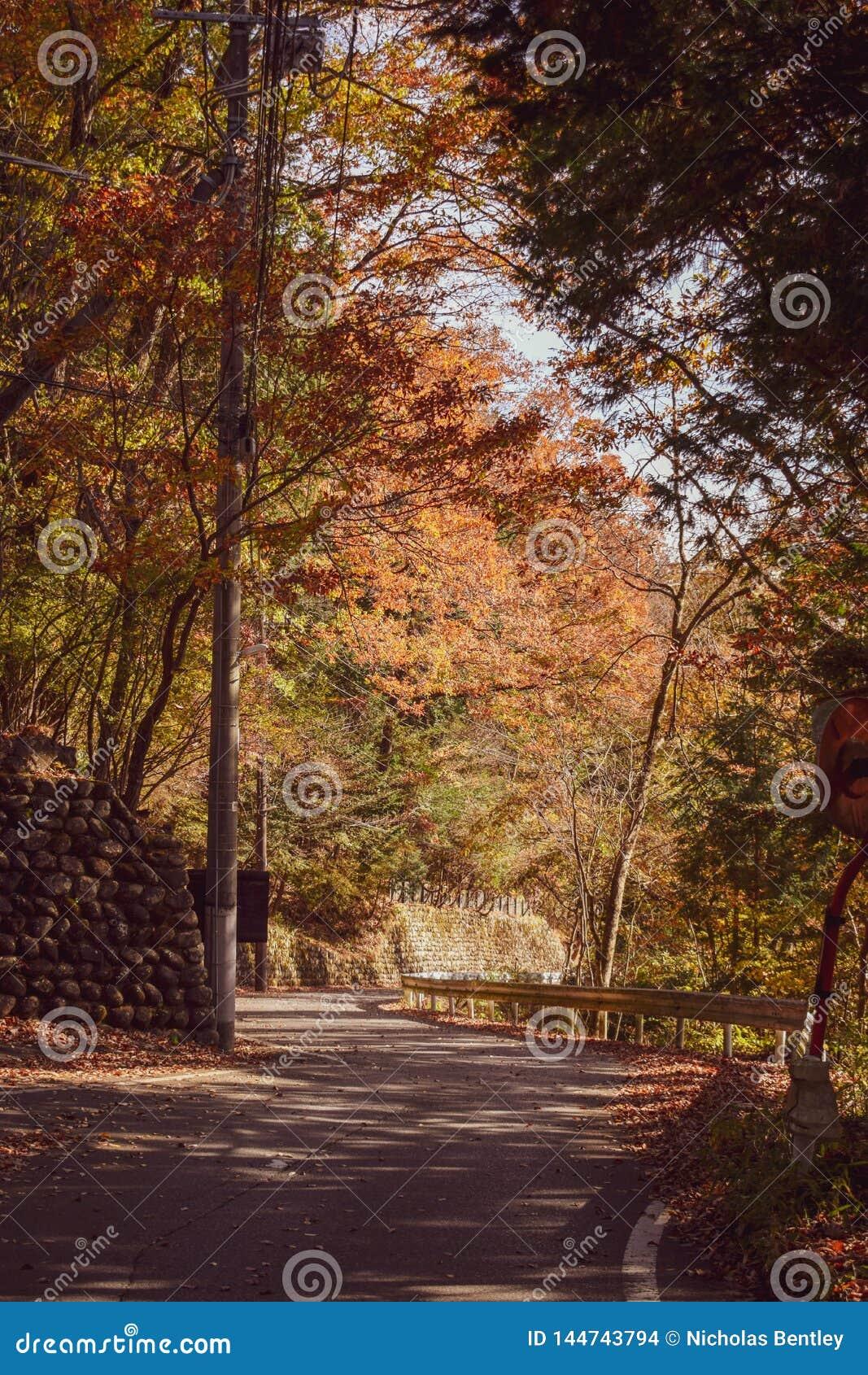 Carreteras nacionales, Nikko Japón