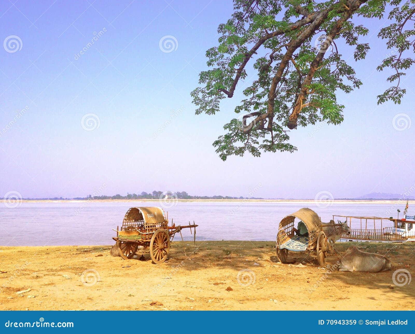 Carretto del bue accanto al fiume di Irrawaddy