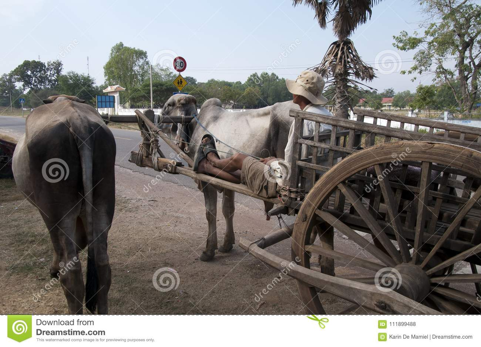 Carretto rurale e agricoltore del bue di scena che aspettano dal bordo della strada