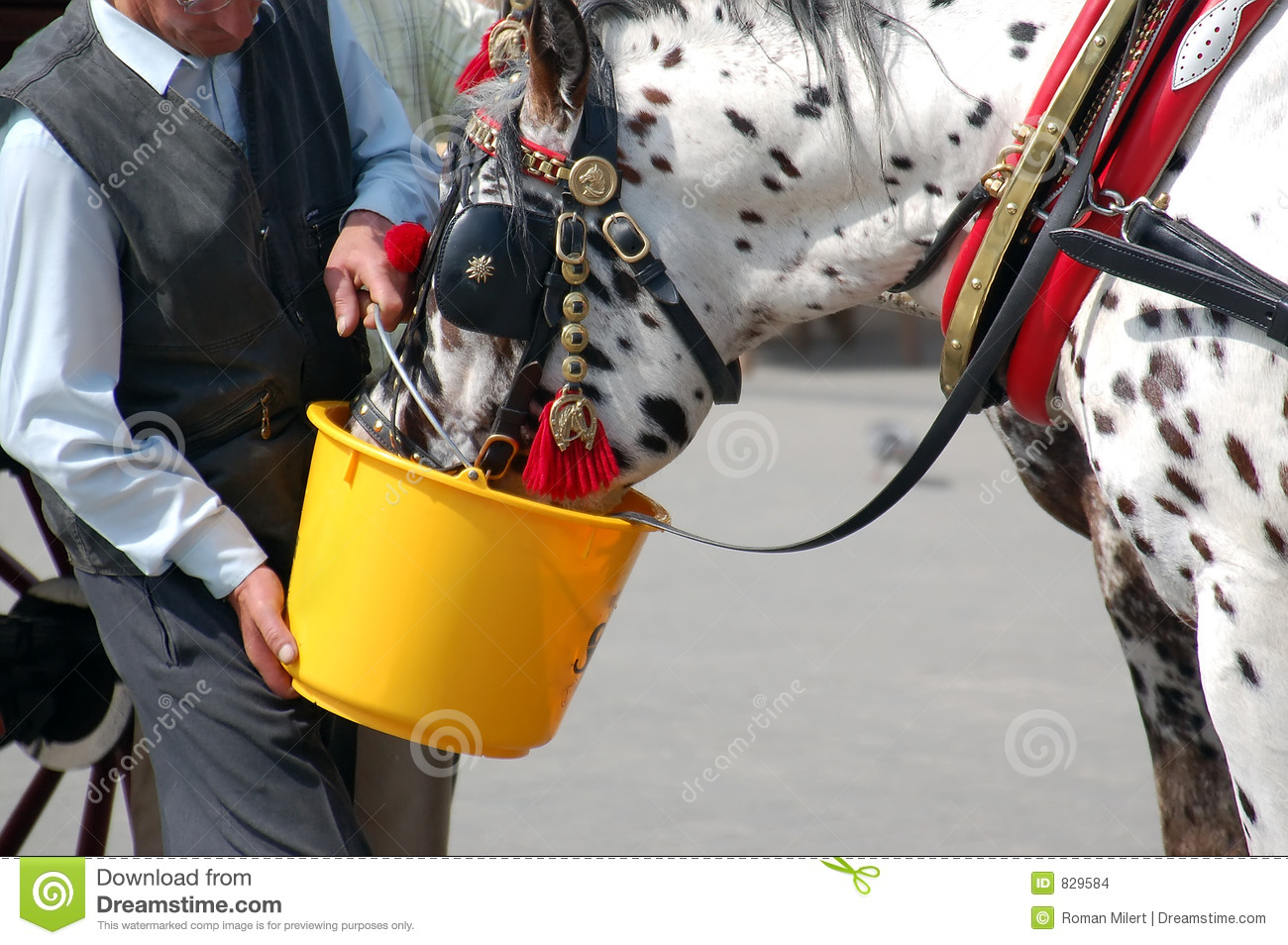 Carriage horse watering