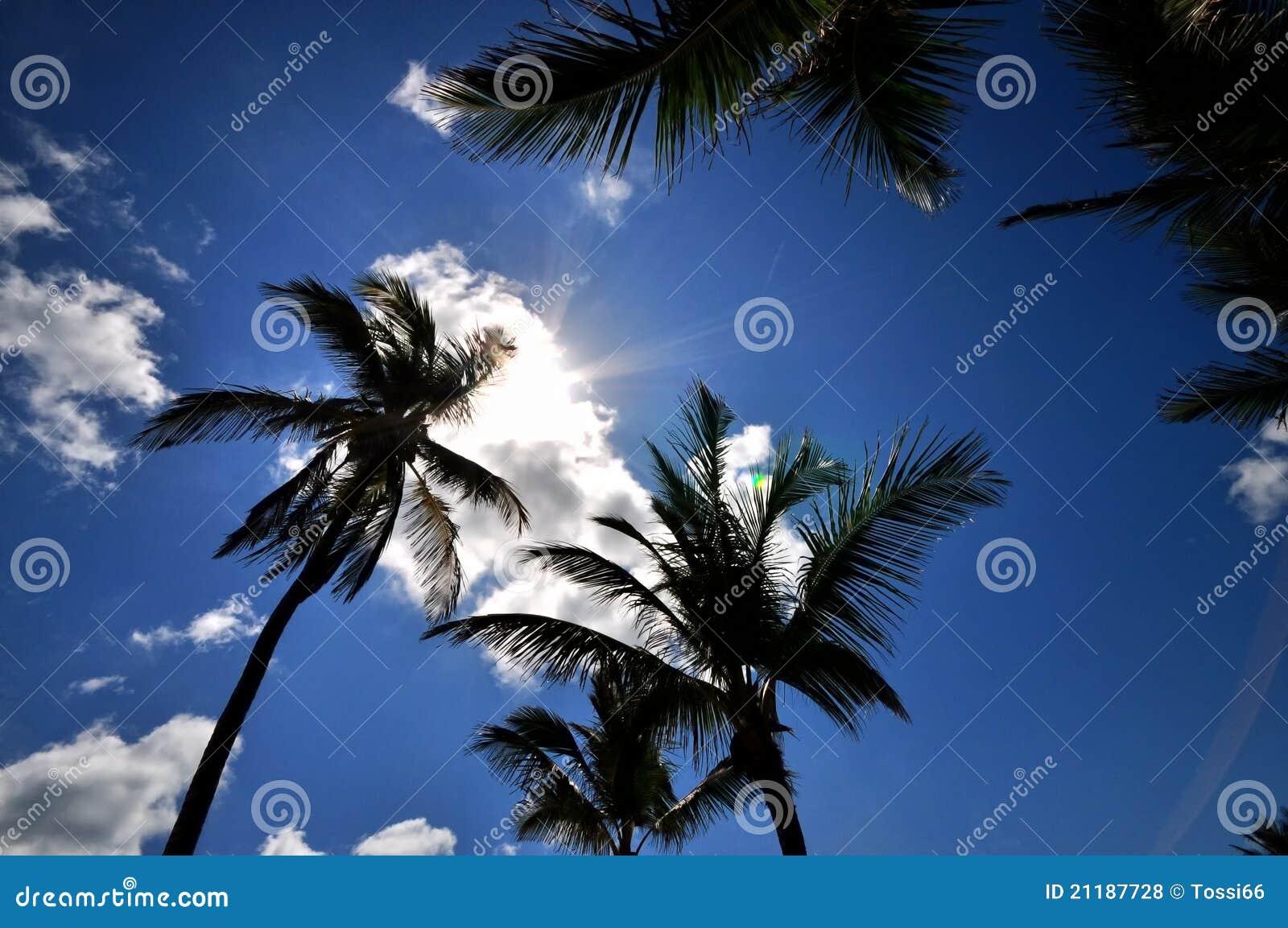 Carribbean Sun