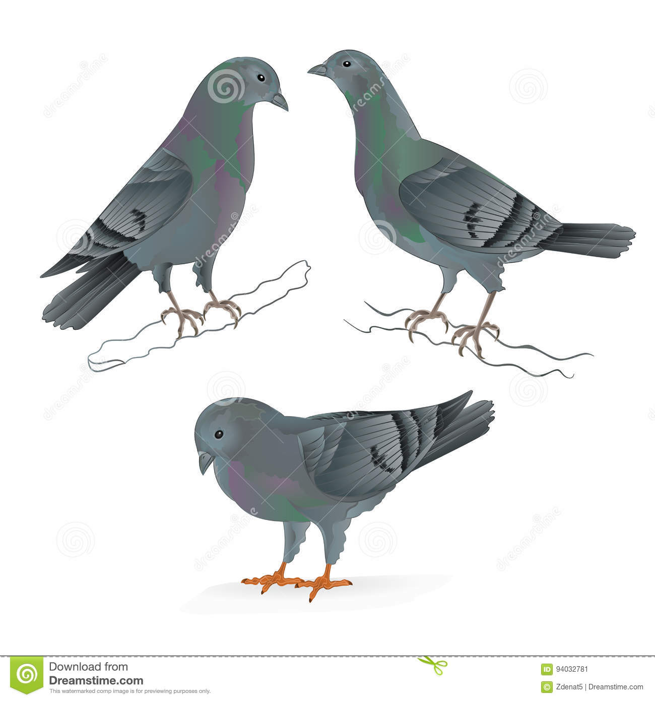 Carriers Pigeons Domestic Breeds Sports Birds Vintage Set Two Vector