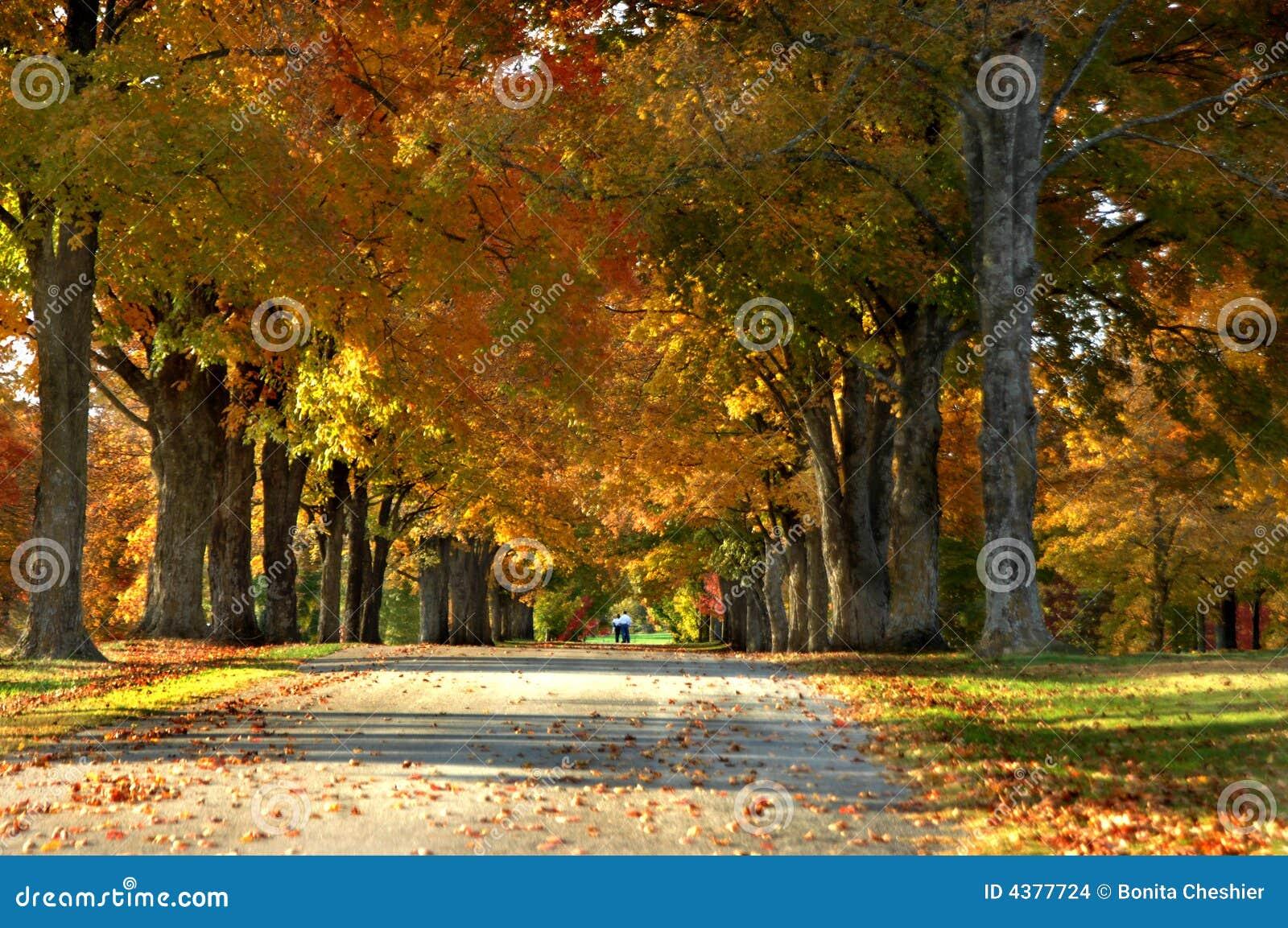 Carril del otoño