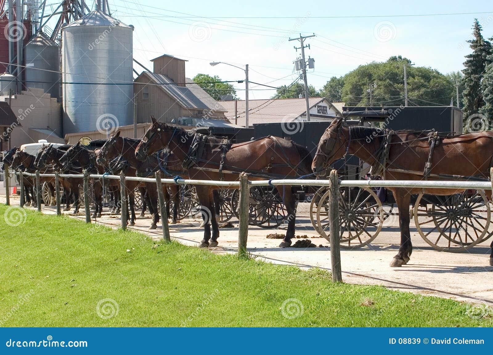 Carrinhos de Amish