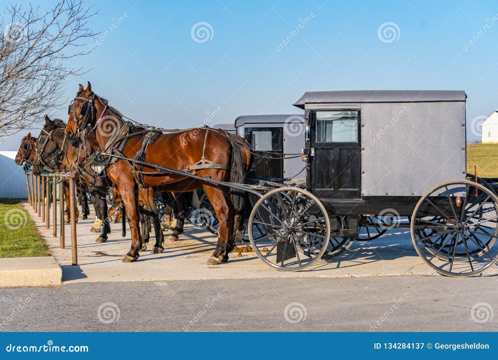 Carrinhos e cavalos Amish