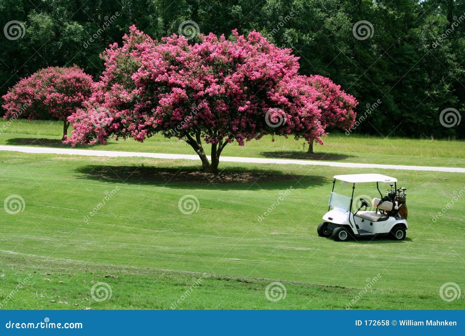 Carro de golf por el Crepe Myrtle