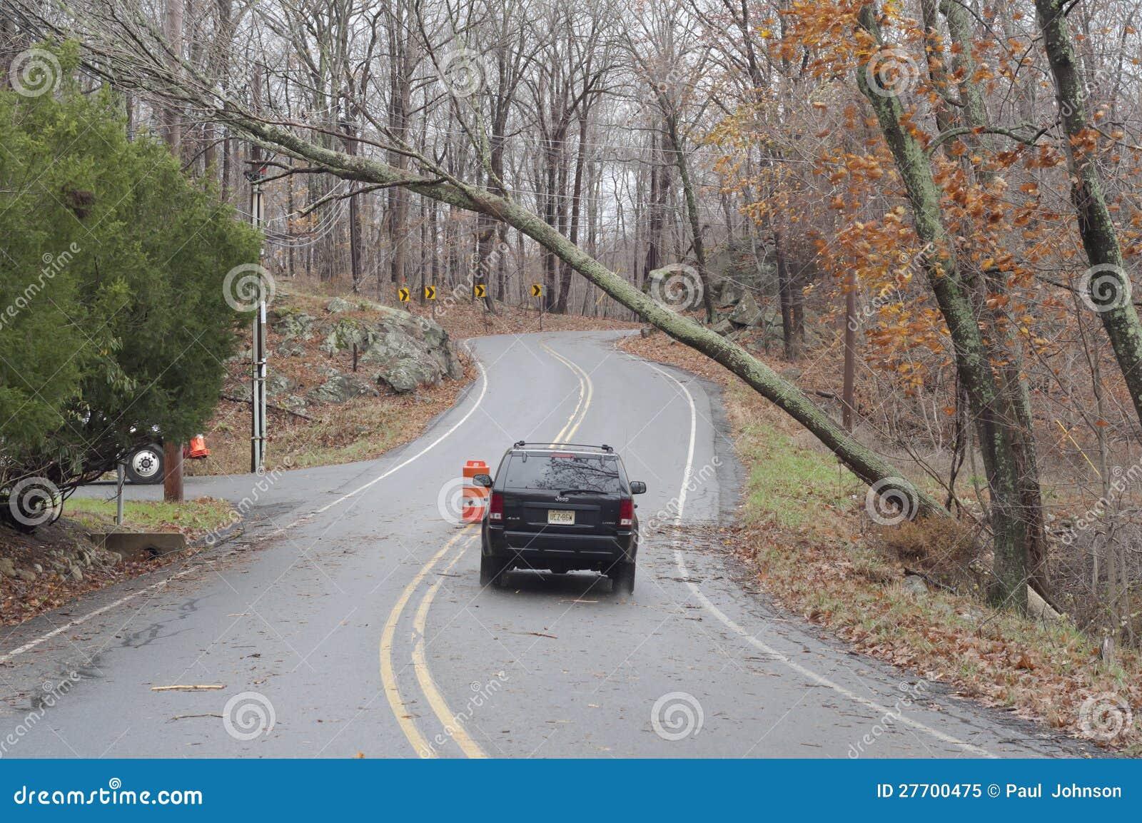 Carro de Sandy A do furacão que passa sob uma árvore