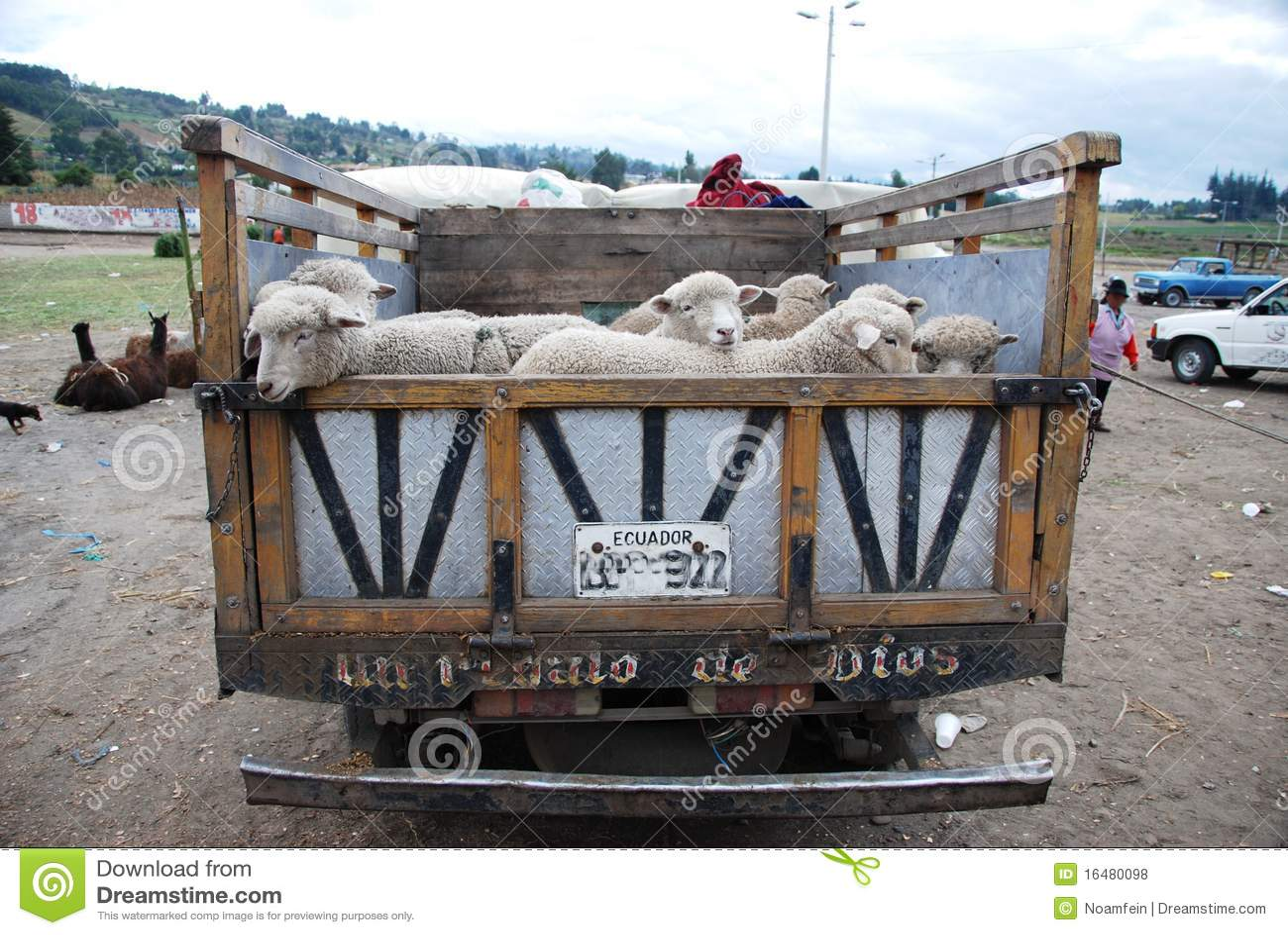 Carro del Ecuadorian por completo con las ovejas