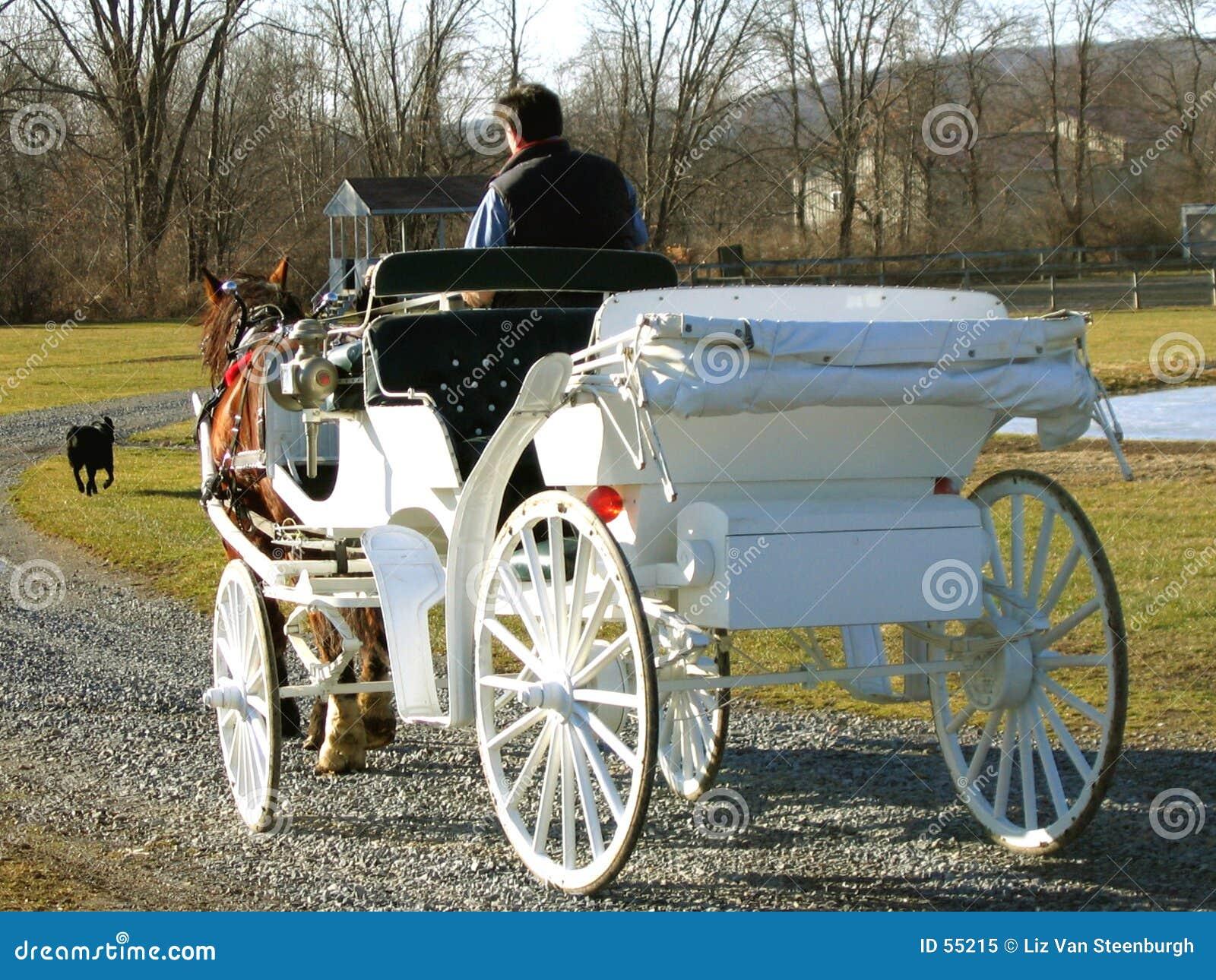 Carro desenhado cavalo