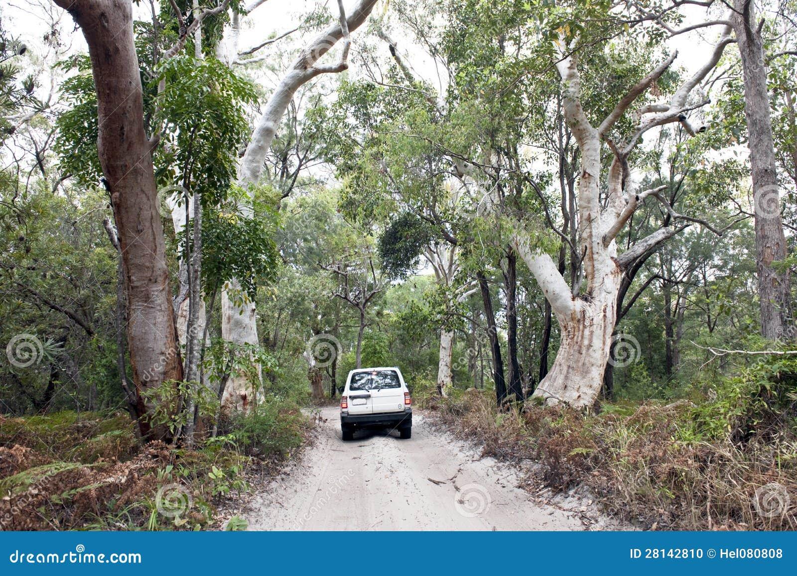 Carro nas florestas da selva da ilha de Fraser