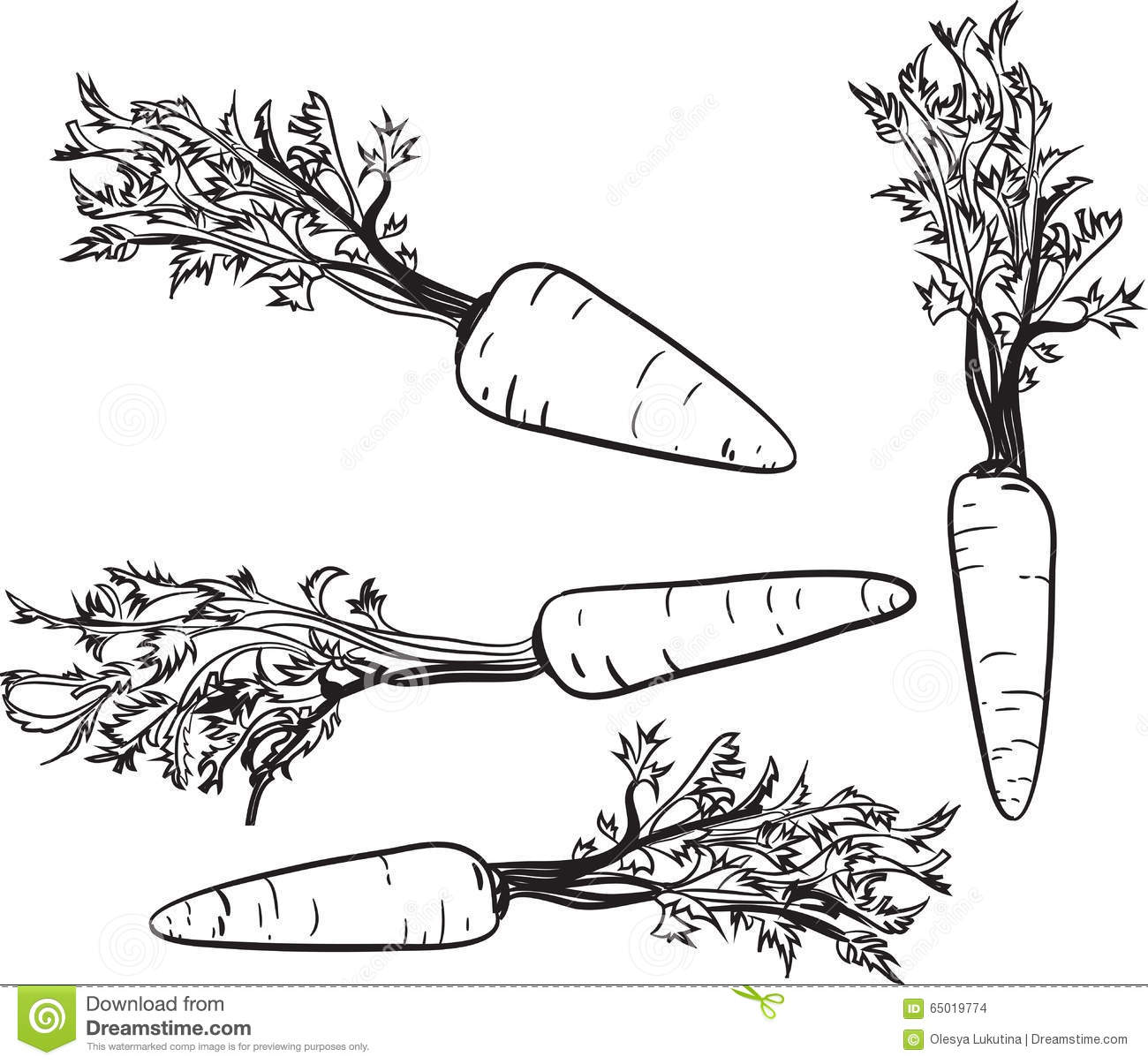 Vector Drawing Lines Java : Carrot line drawing of a vector illustration