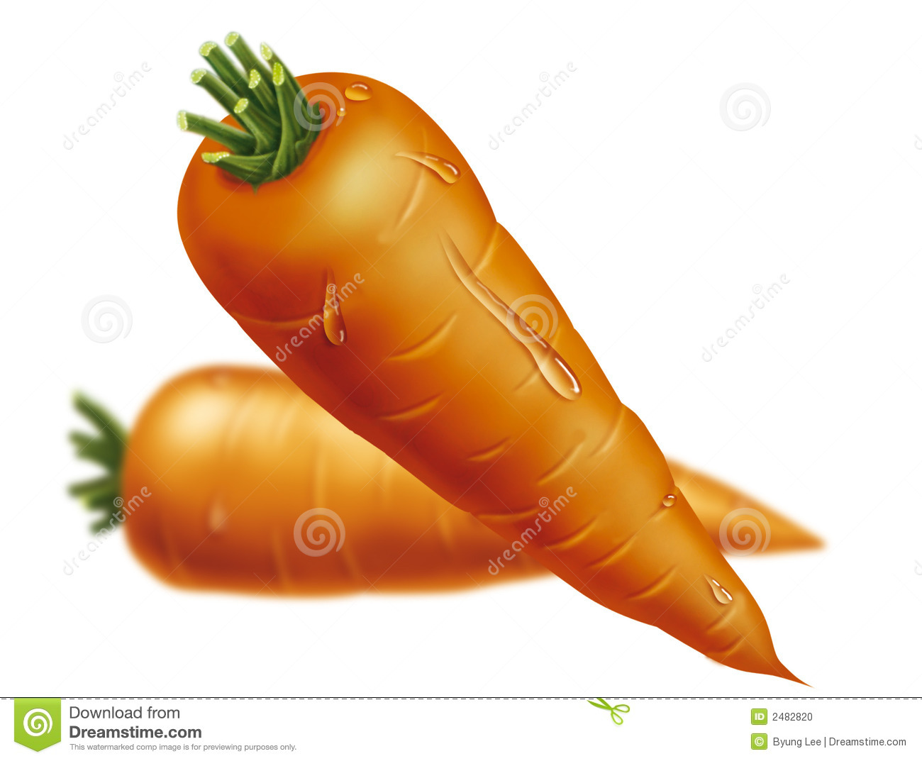 Carrots Drawing Stock Photo - Image: 2482820