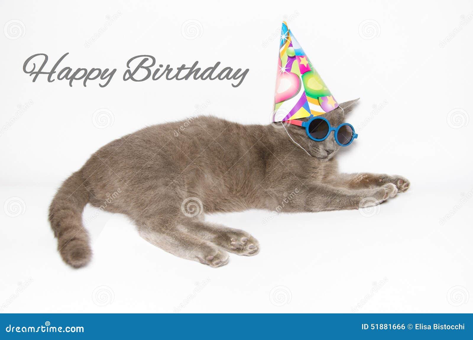 Cartão do feliz aniversario com gato engraçado
