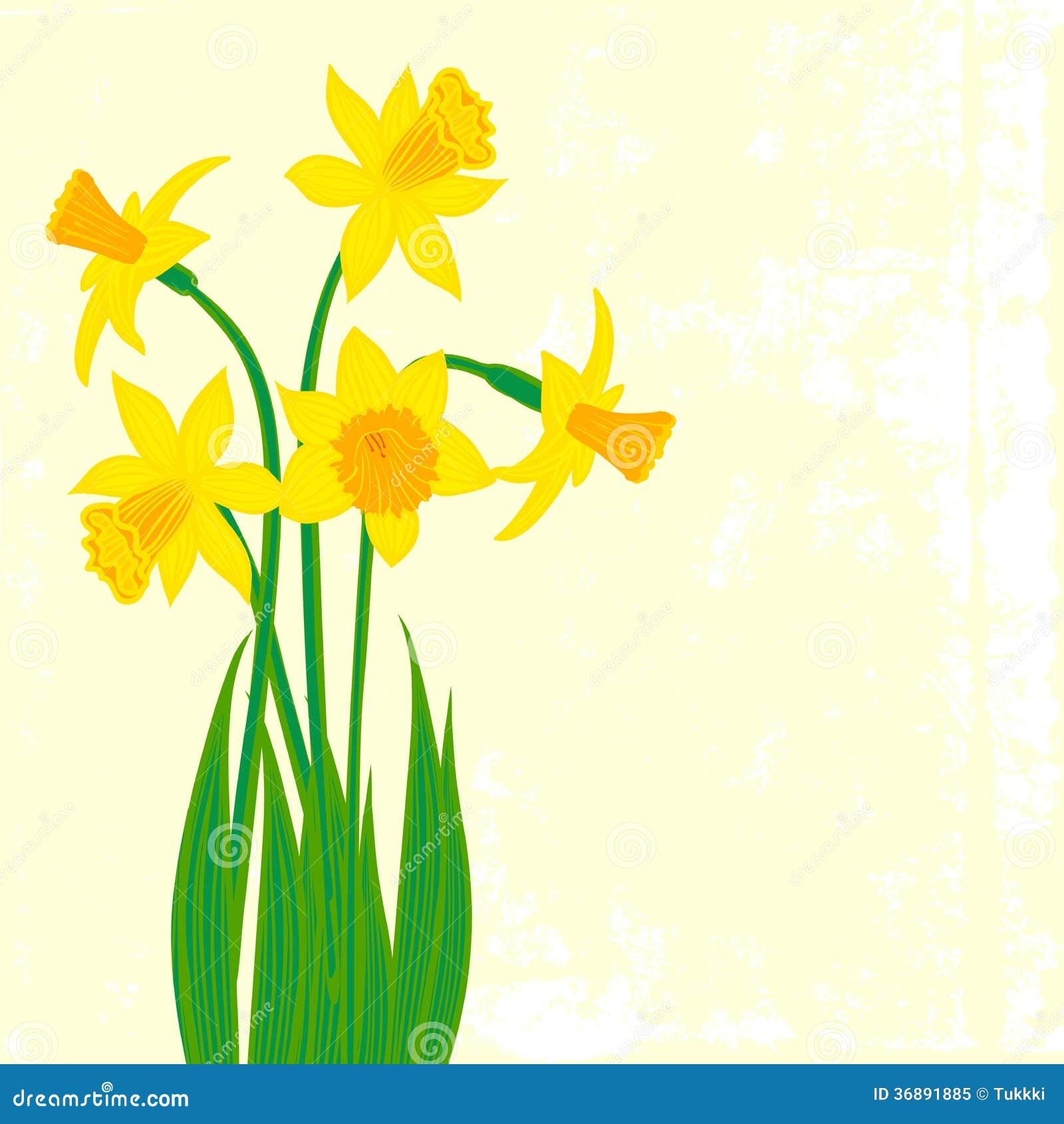 Download Carta con cinque narcisi illustrazione vettoriale. Illustrazione di mano - 36891885