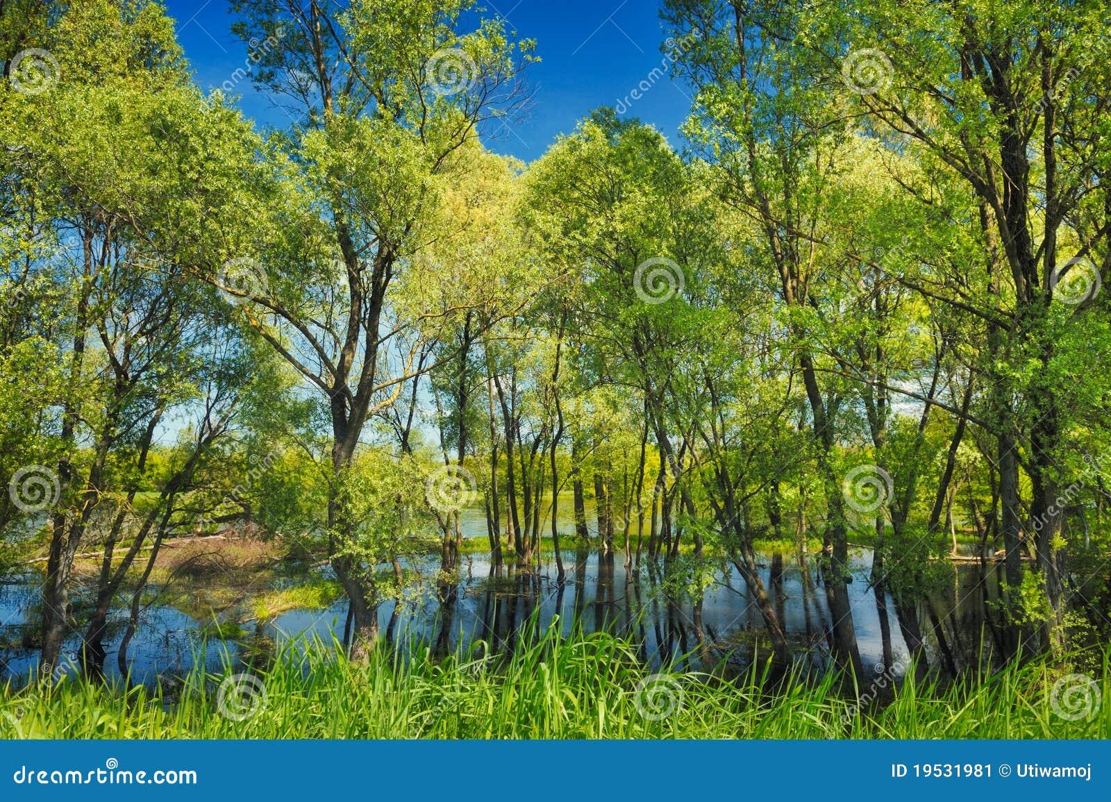 Carta da parati degli alberi nella palude vicino al fiume for Carta da parati alberi stilizzati