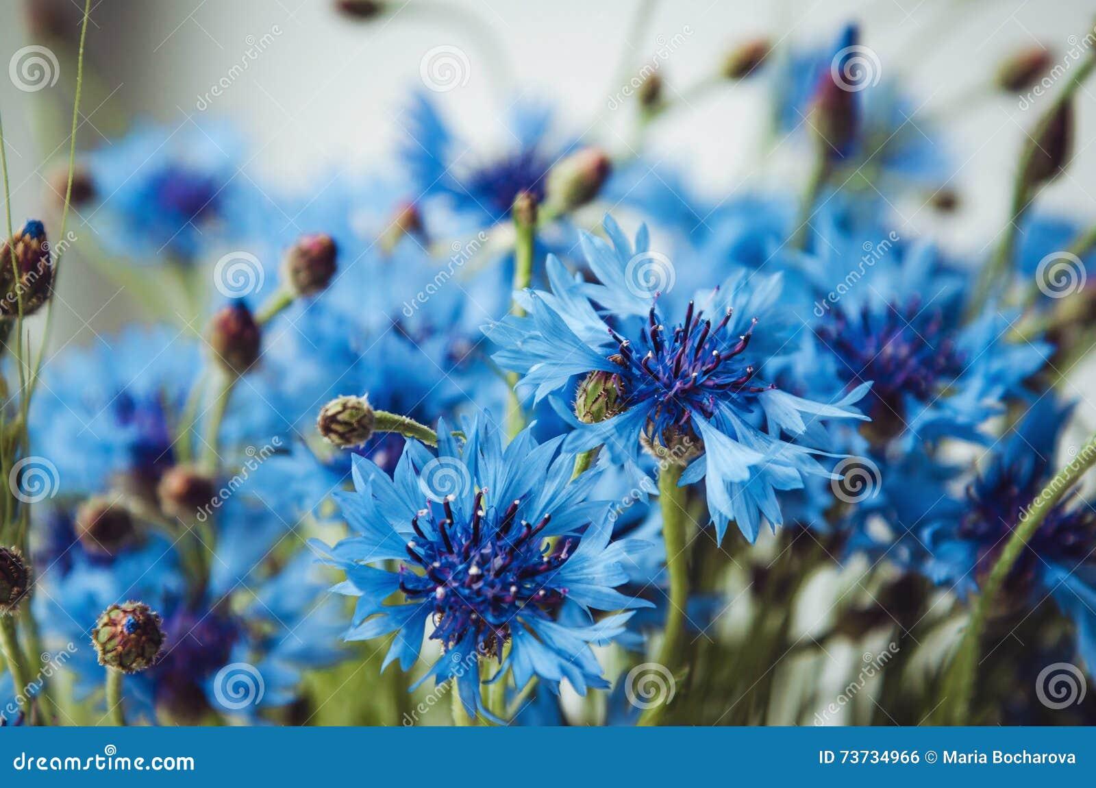 Carta da parati di estate di fiordaliso blu erba verde su for Carta parati blu