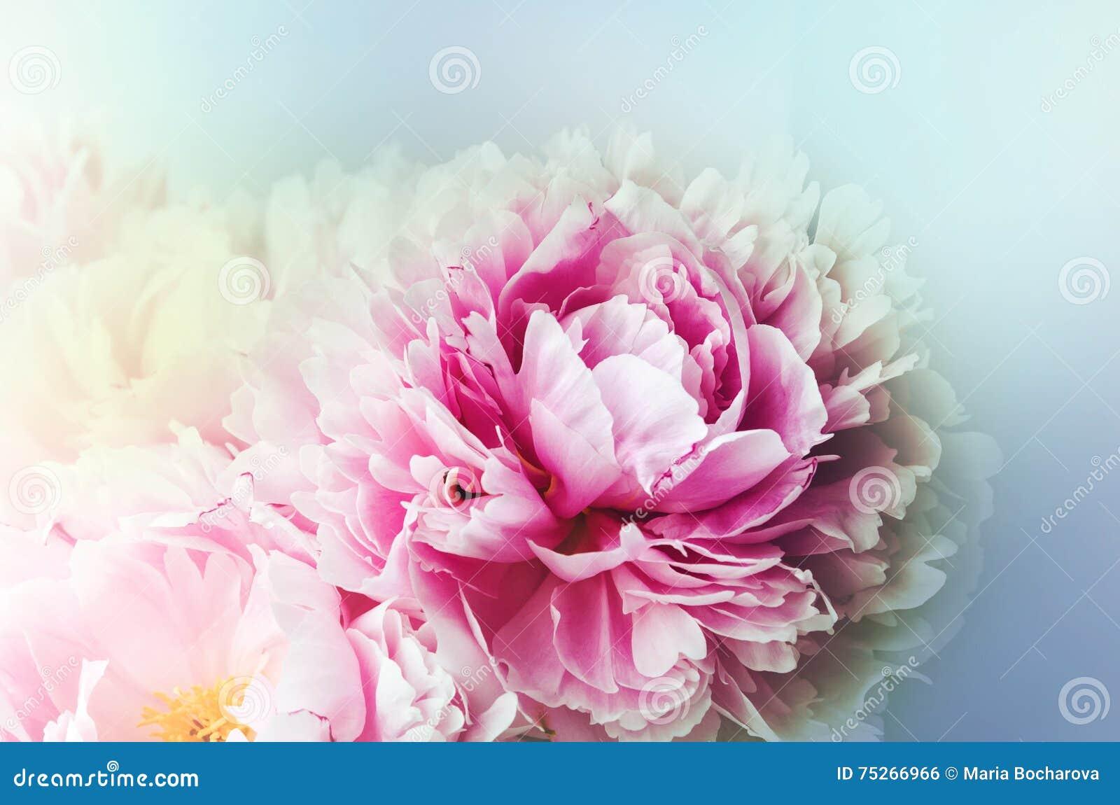 Carta da parati floreale fondo dai petali del fiore la for Carta parati blu