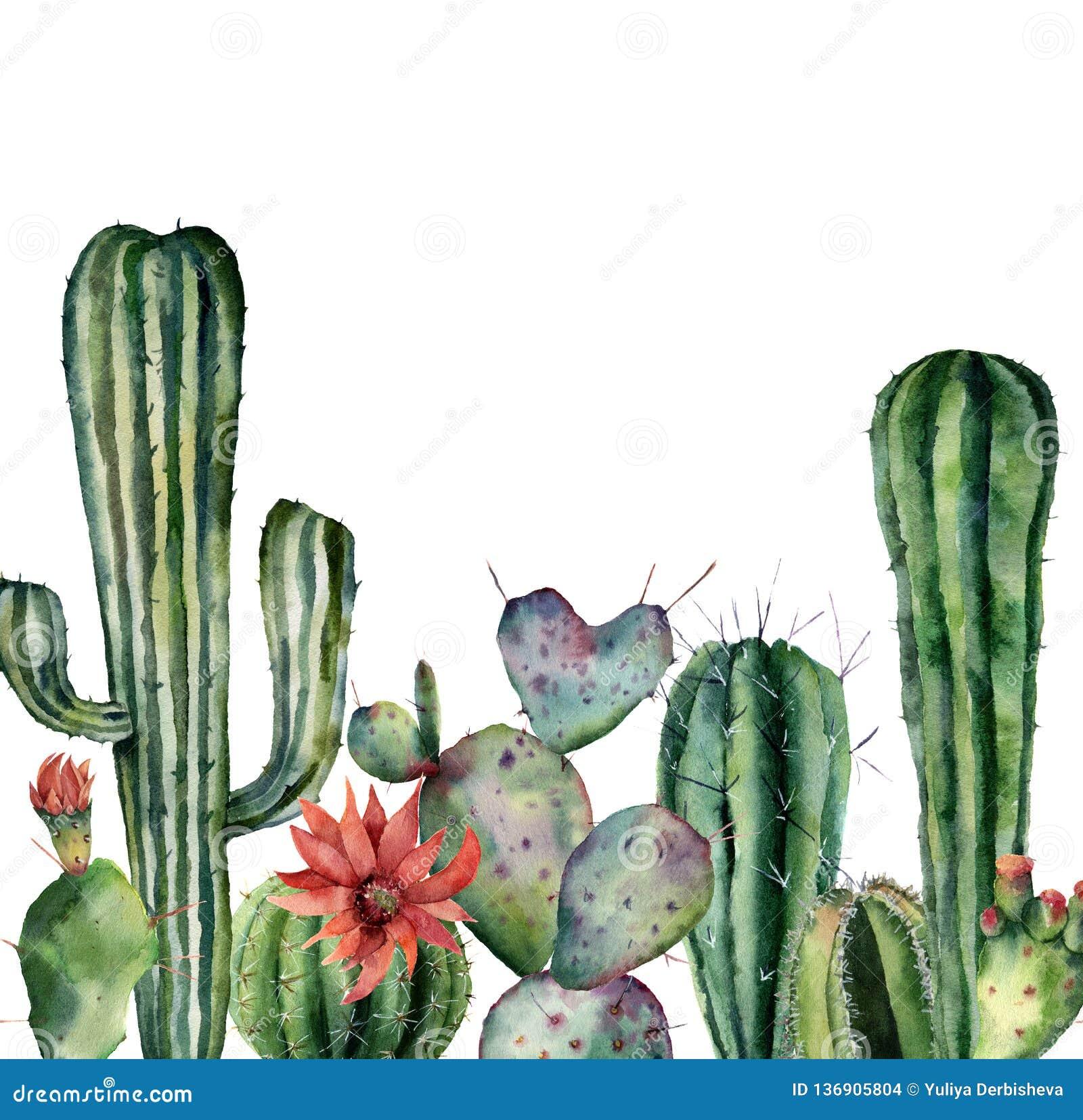Carta dell acquerello con il cactus Stampa dipinta a mano con le piante del deserto isolate su fondo bianco Carta di fioritura de