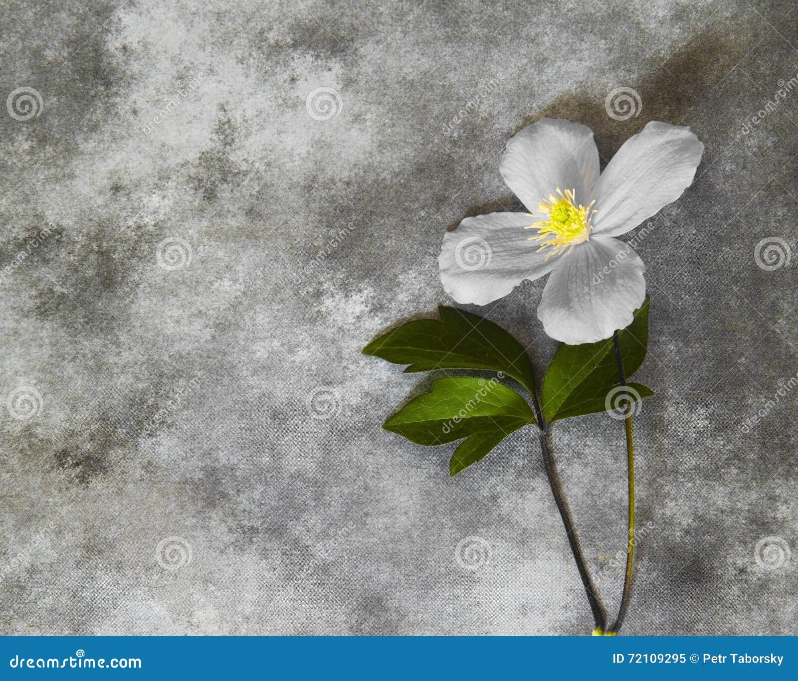 Carta di condoglianza - fiore
