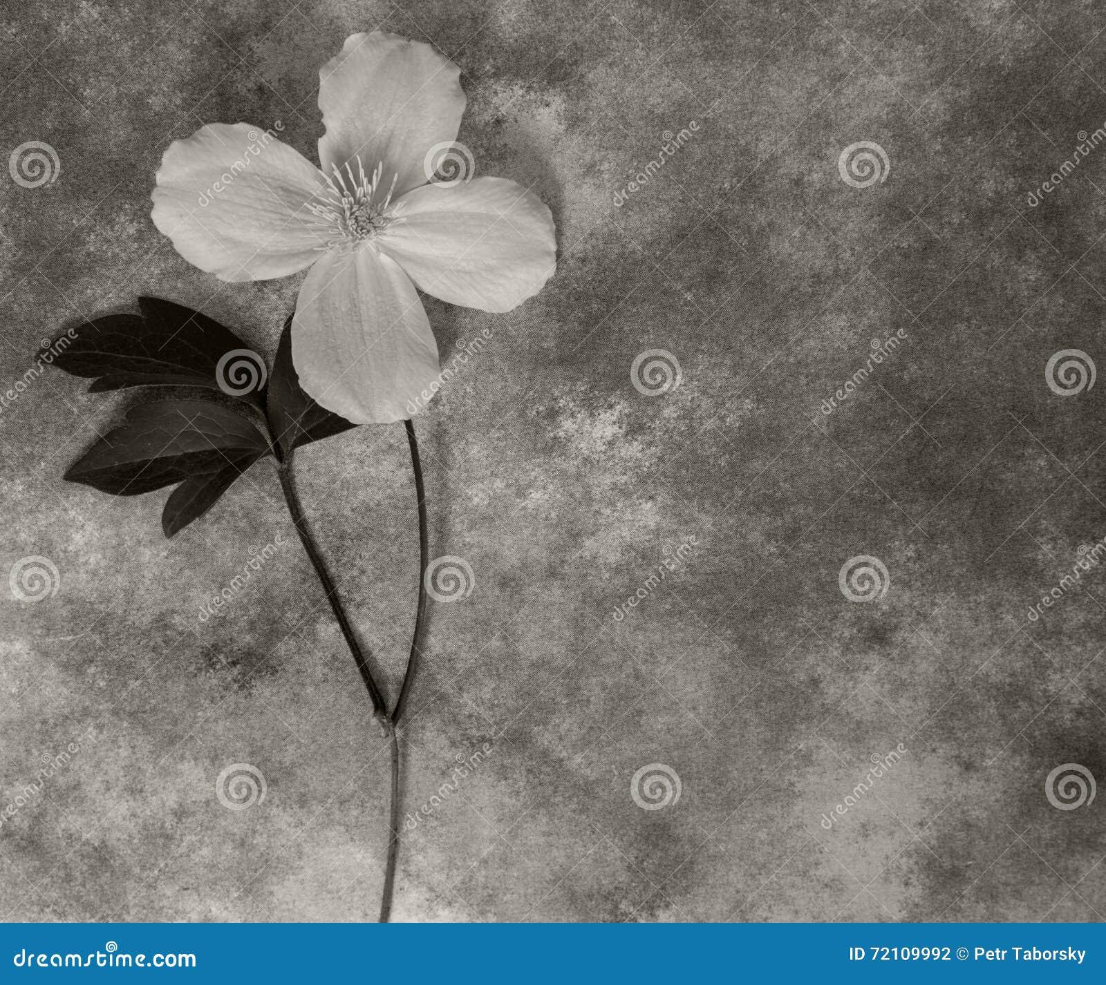 Carta di condoglianza - fiore bianco