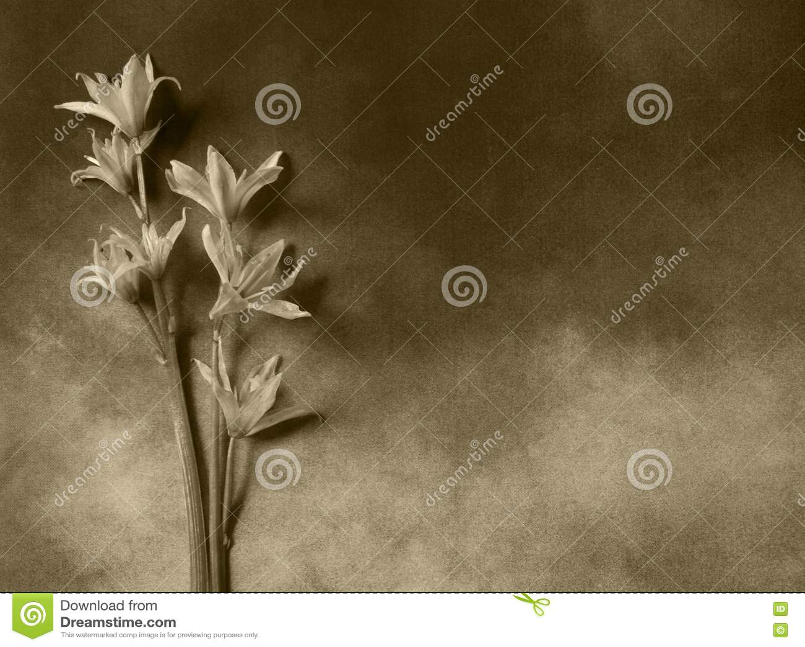 Carta di condoglianza - fiori grigi