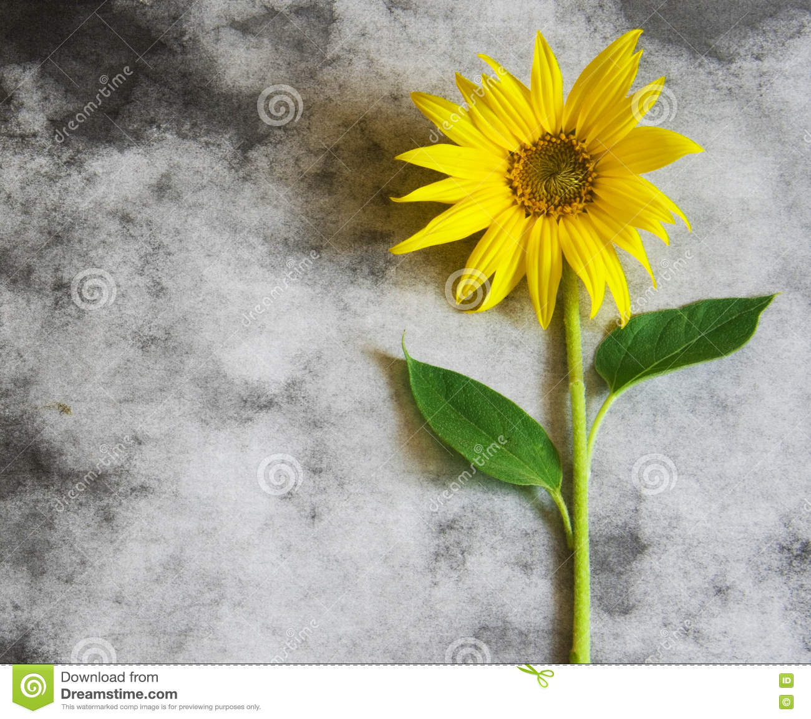 Carta di condoglianza - girasole giallo