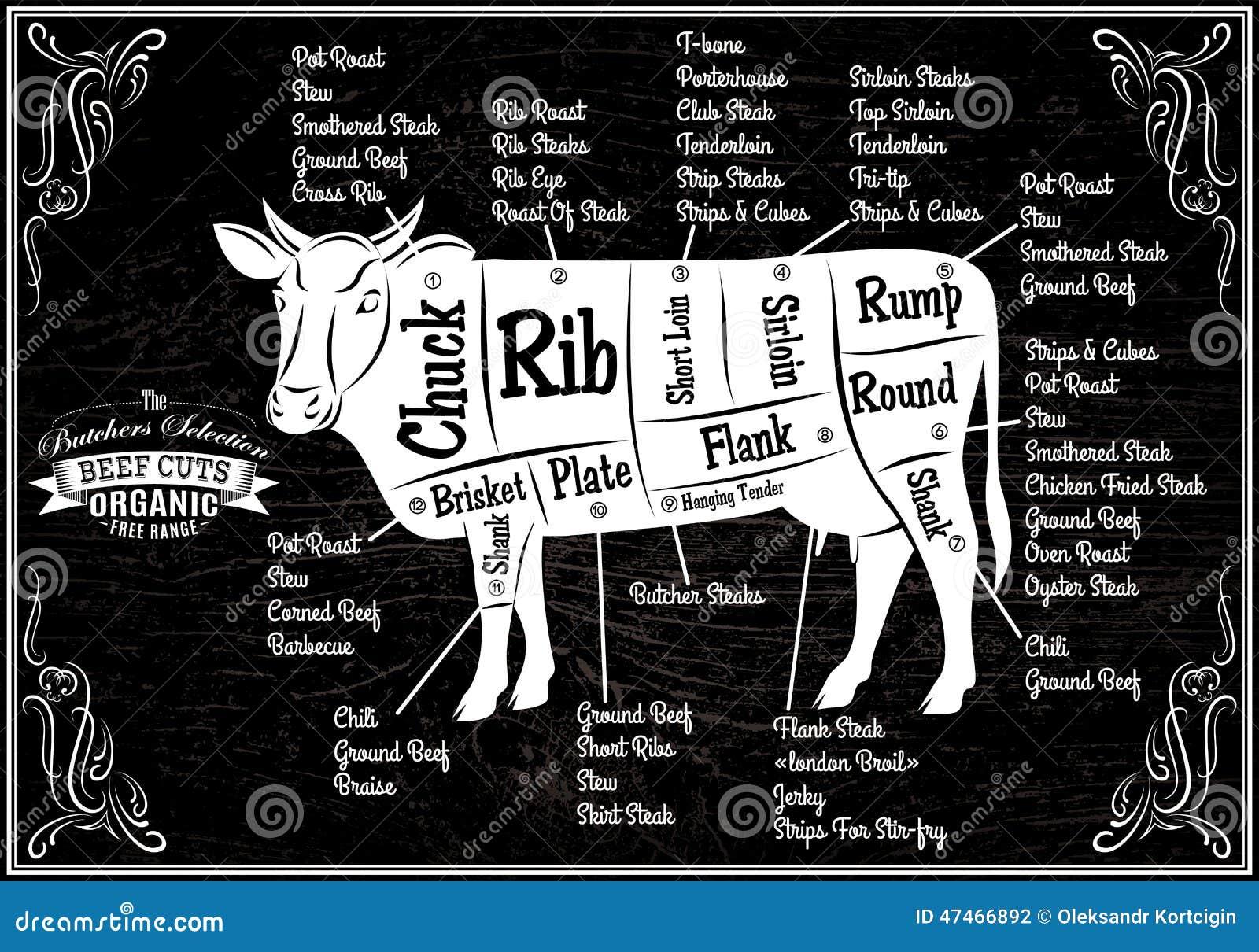 Cartaz com as vacas do corte do diagrama detalhado