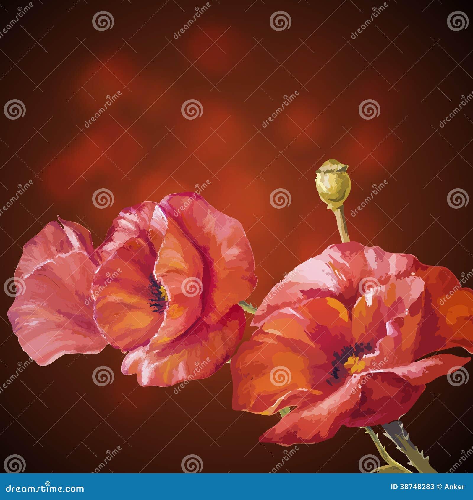 Carte Avec Des Fleurs De Pavots Illustration de Vecteur - Illustration du composition, lame ...