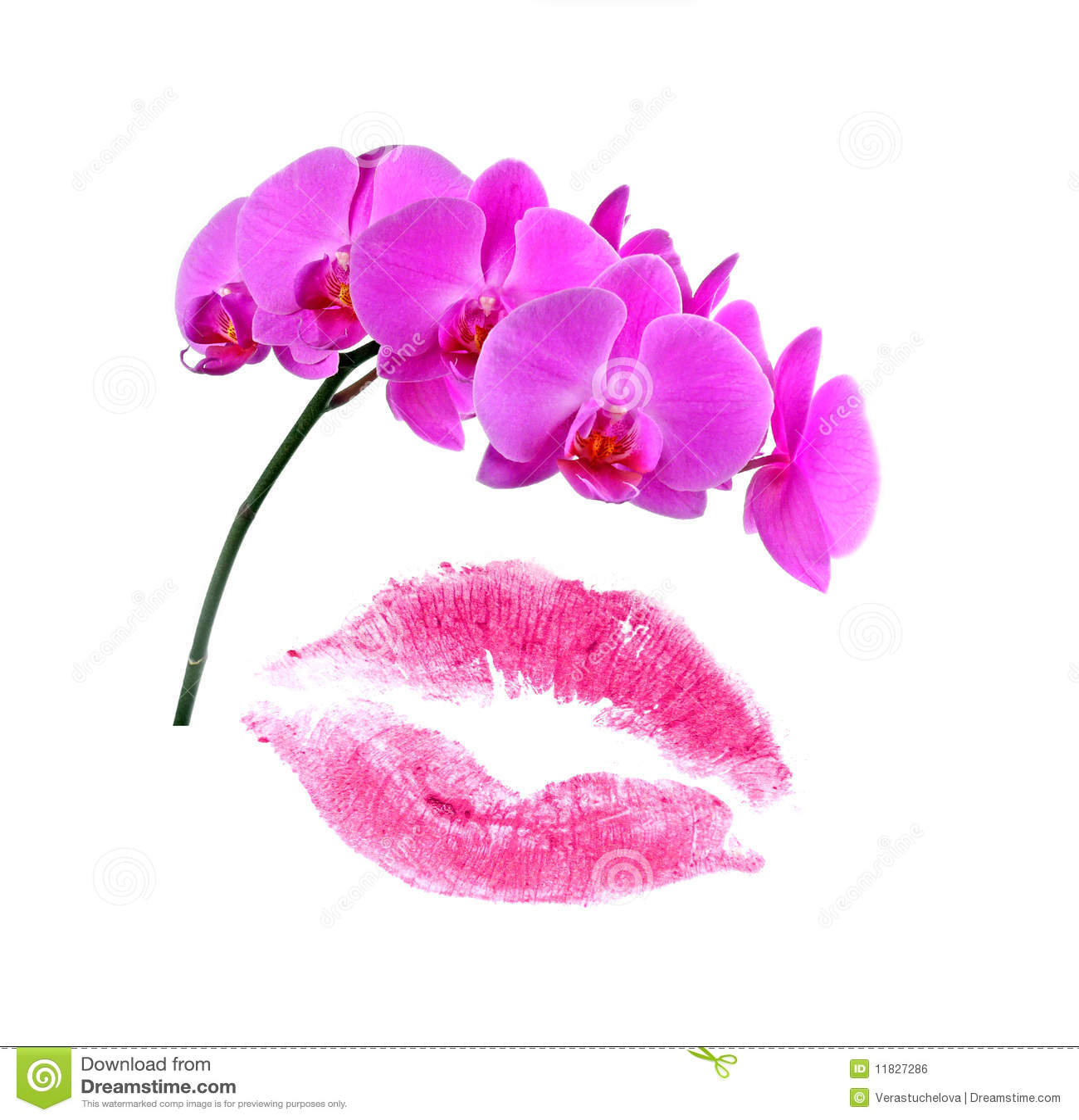 carte d 39 amour avec l 39 orchid e de kissand illustration. Black Bedroom Furniture Sets. Home Design Ideas