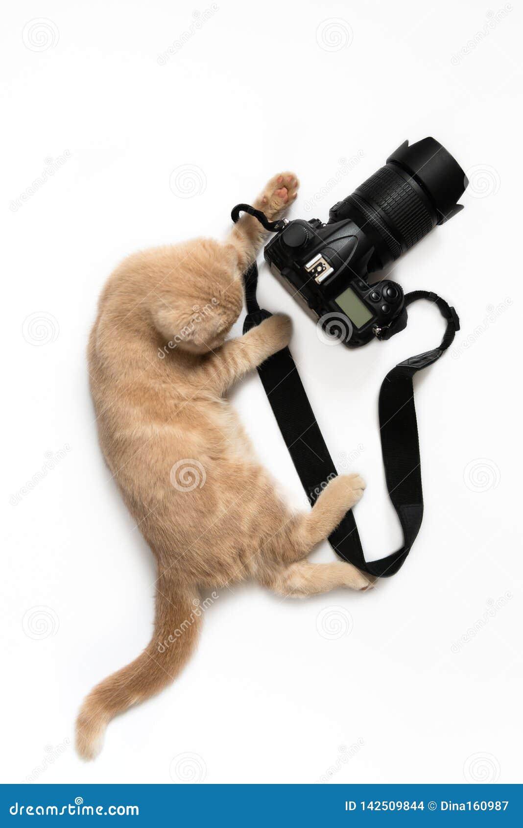 Carte de concept de photographe Chat mignon avec la caméra prenant une photo d isolement sur le fond blanc Jour de photographie d