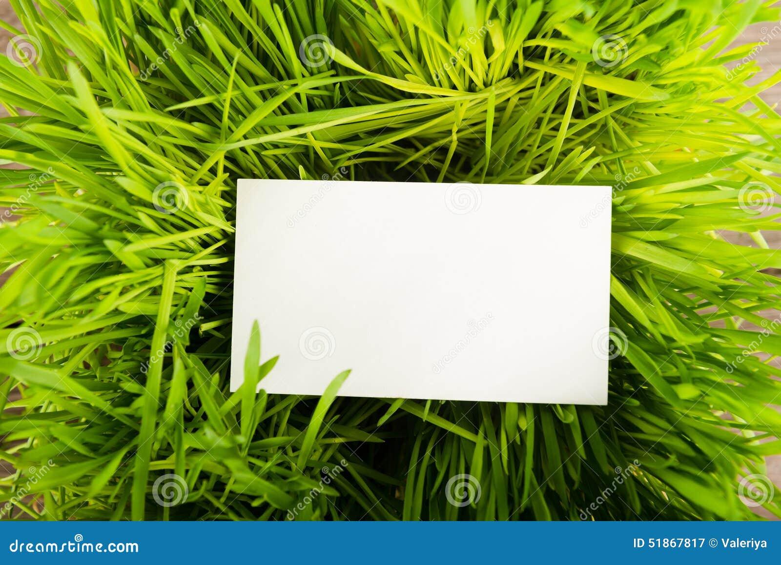 Carte De Visite Professionnelle Vierge Dans L Herbe Verte
