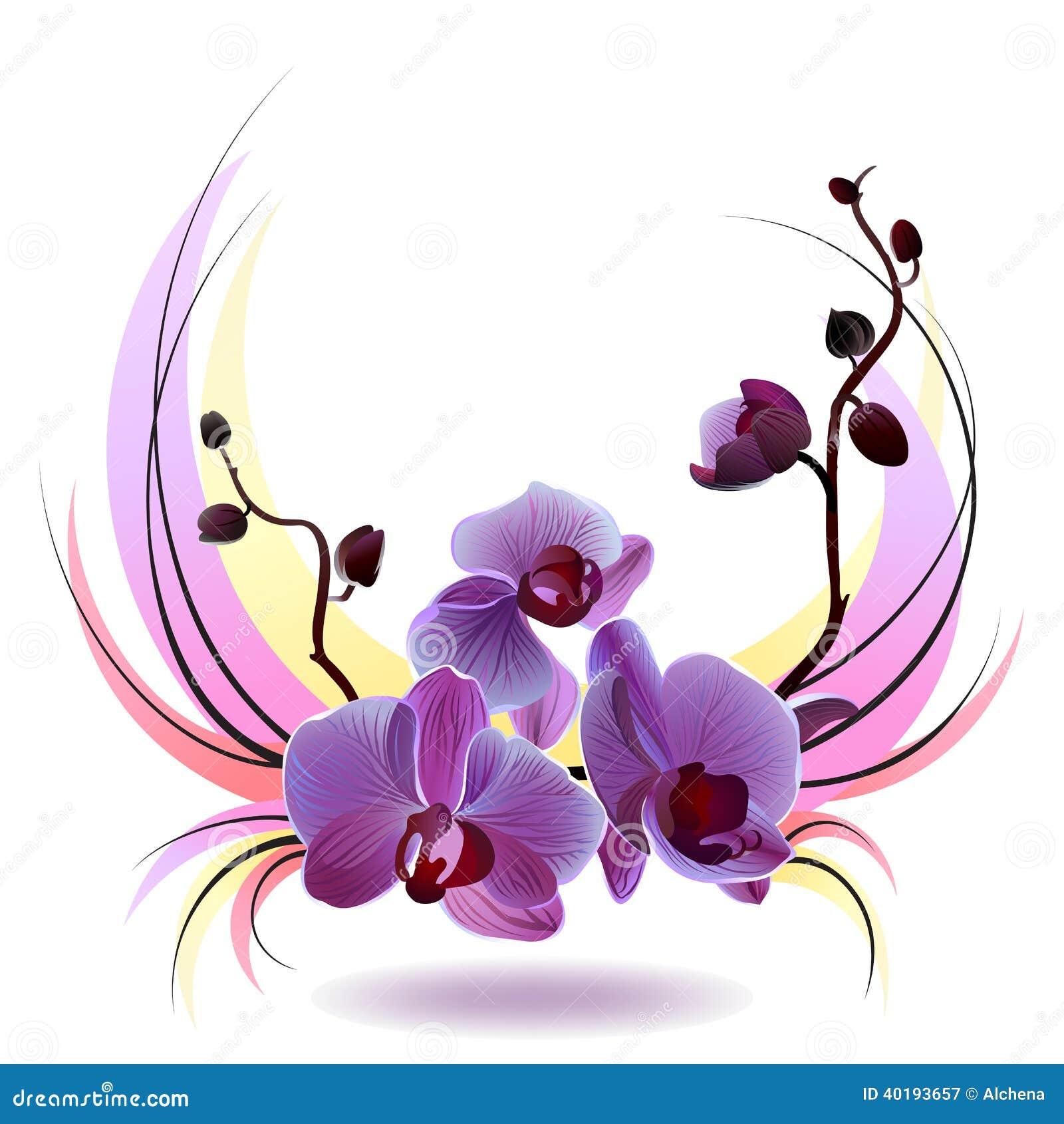 Carte de voeux de vecteur avec le bouquet d 39 orchid es illustration de vecteur image 40193657 - Dessin d orchidee ...